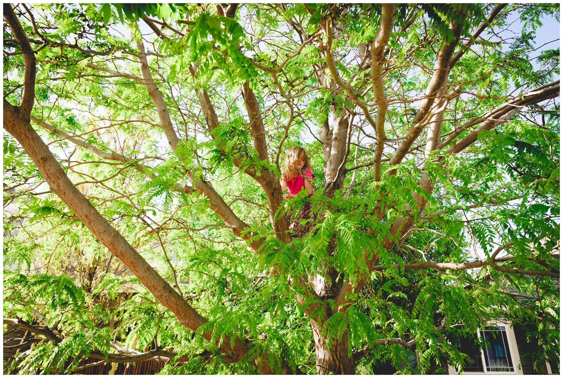 TreeClimbin3.jpg