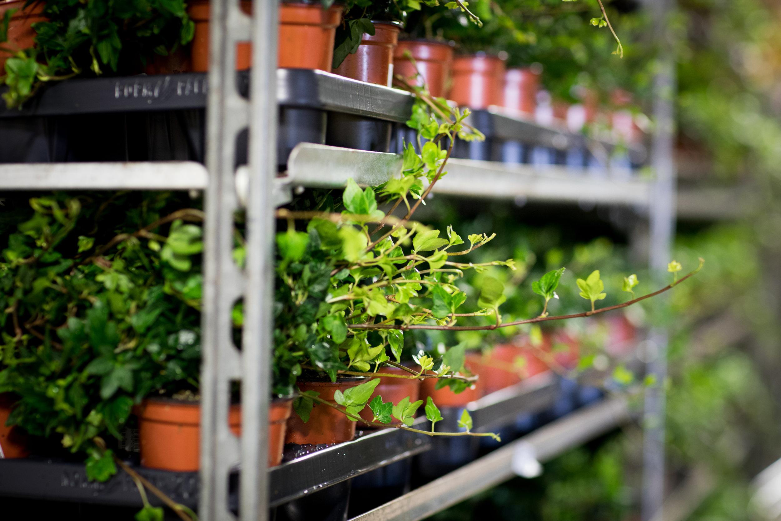Alle plantene settes skånsomt inn på blomstercontaineren, for å ta vare på alle blader.