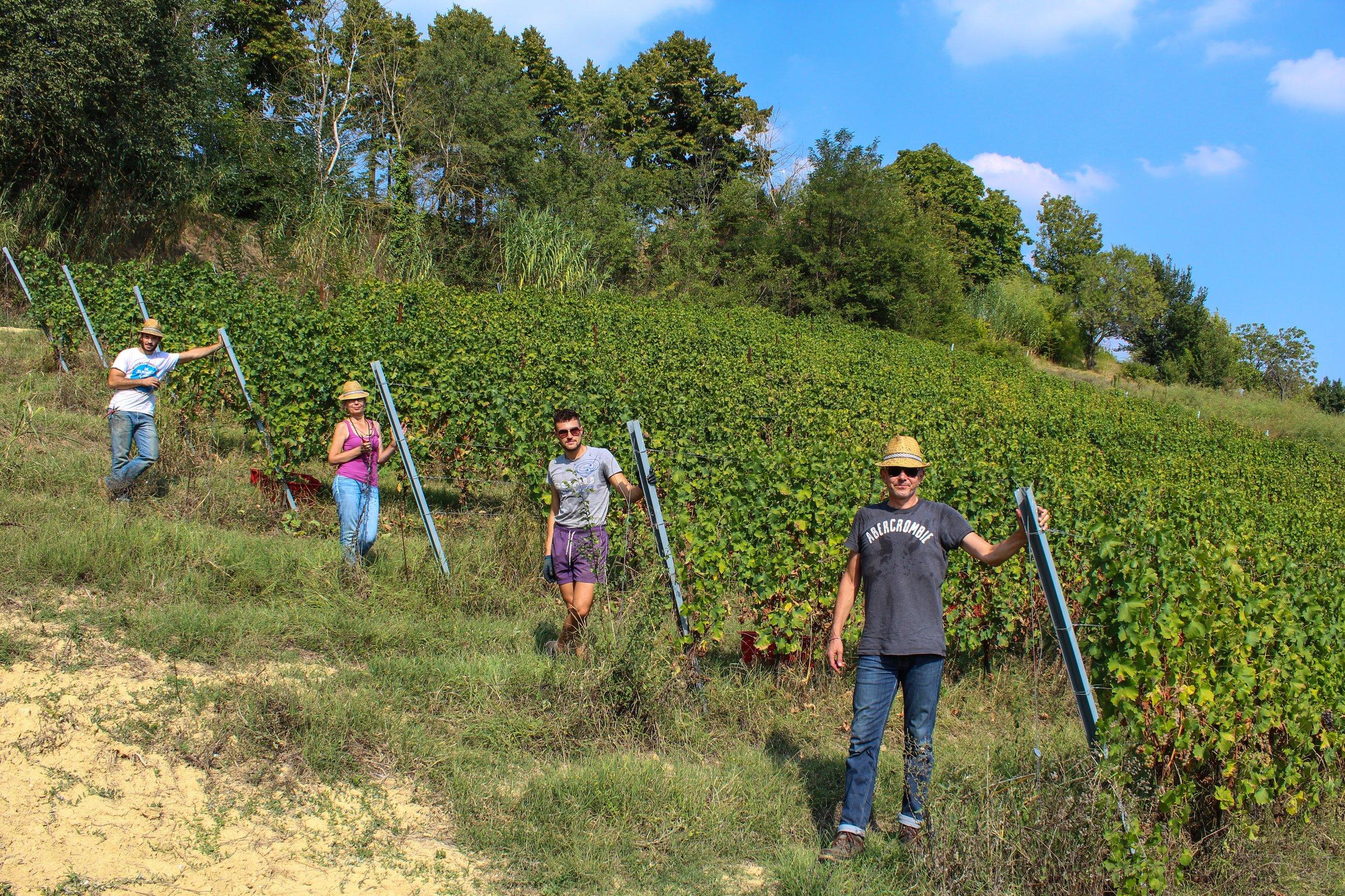 Camminare le Vigne -