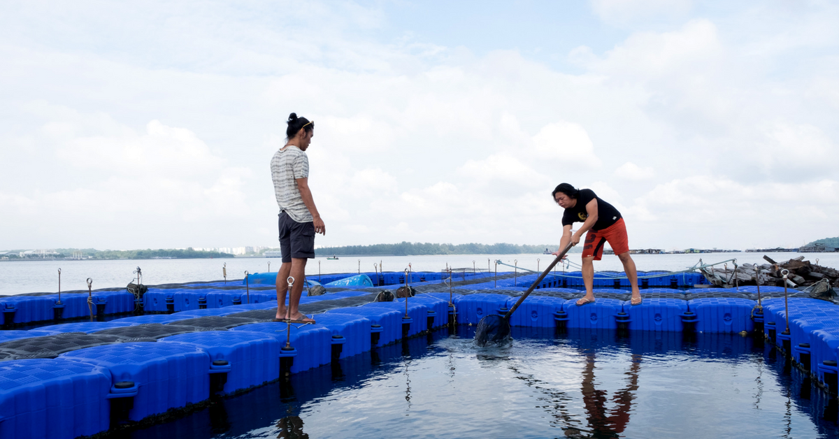 I Tried fish farming in singapore for the first time - YP SG, March 2018