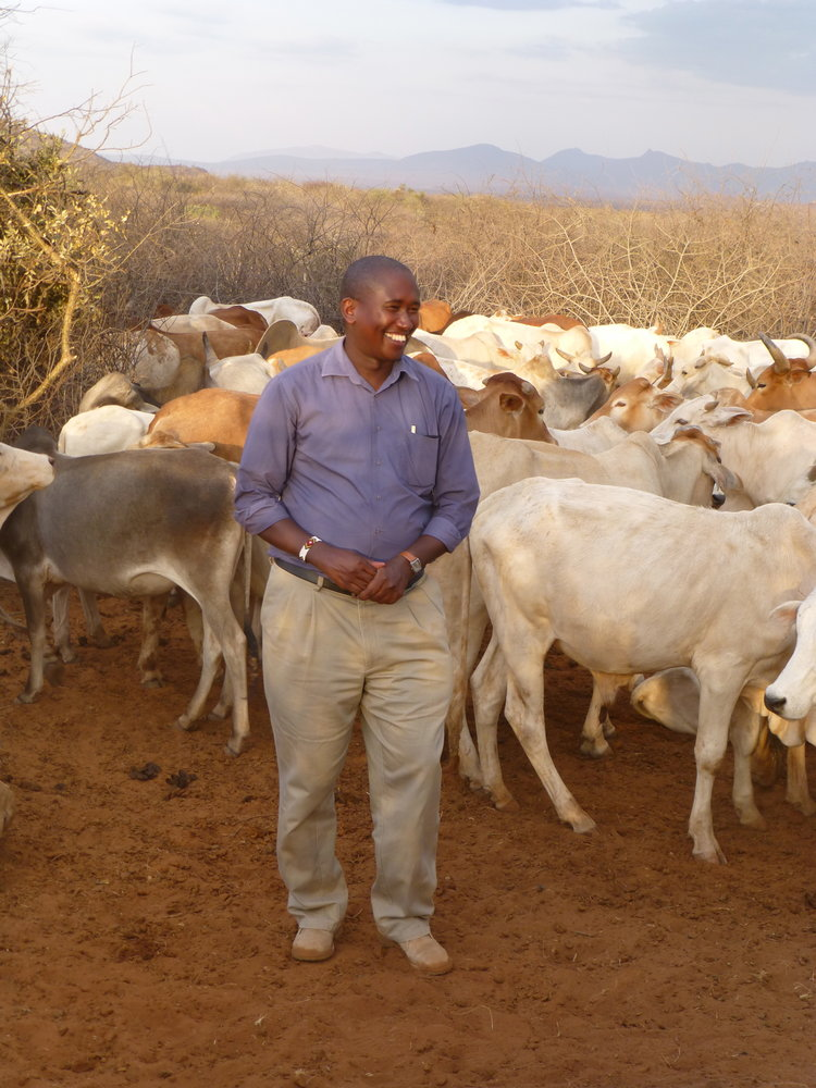 Tom+with+cattle.jpg