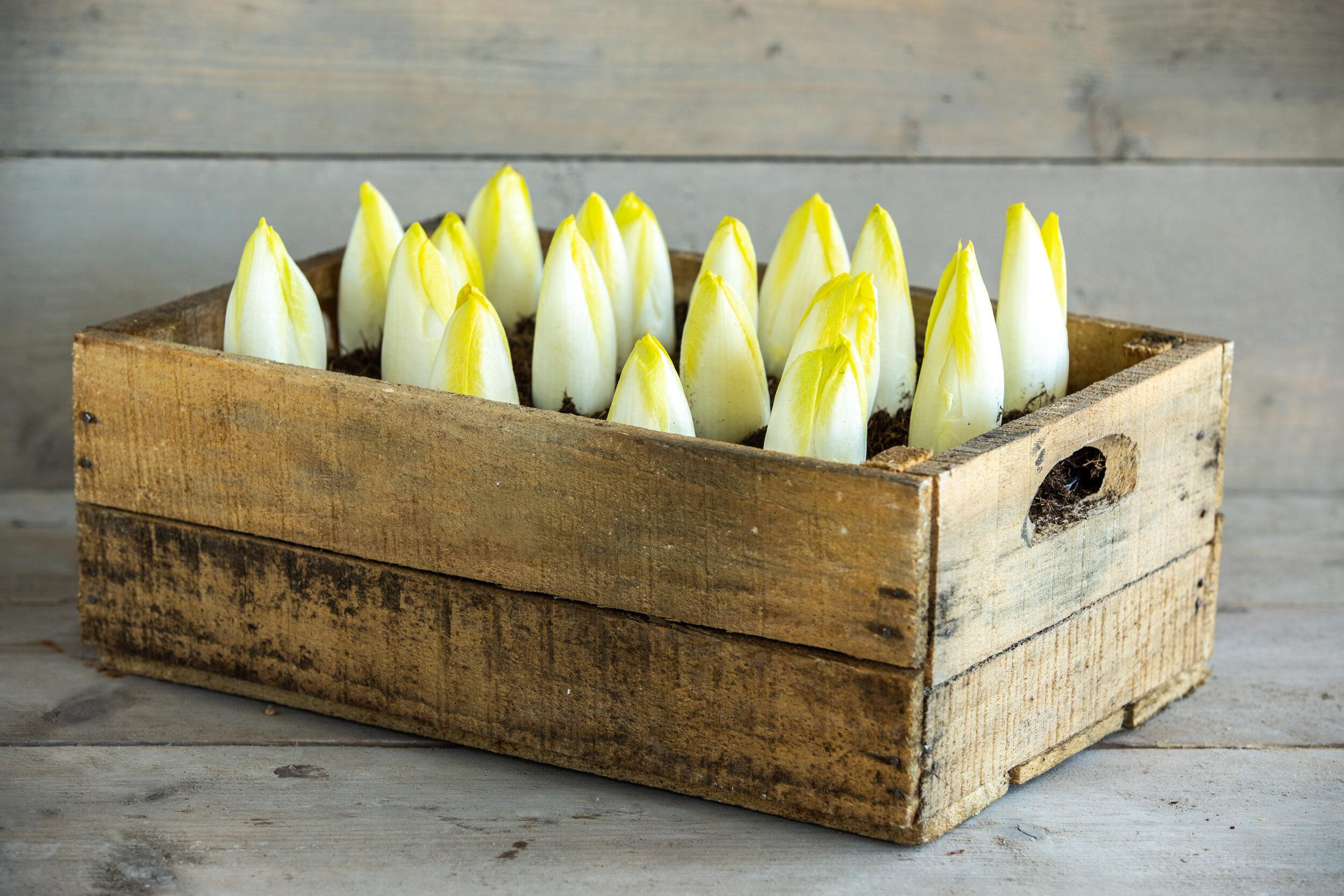 Made in Antwerp produce 10.jpg