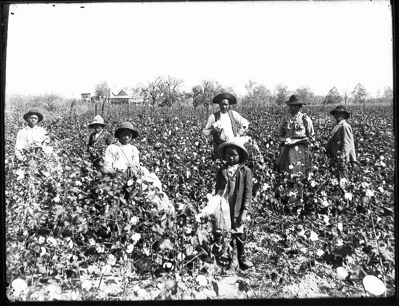 This photo, taken around 1890, gives a small glimpse into how grueling picking cotton all day would have been.   Wikicommons