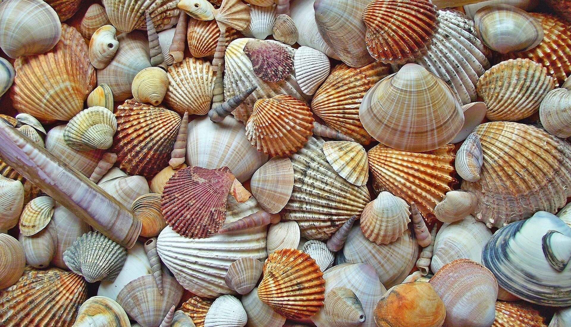 the friends who pluck each other's bushes with shells are friends forever. -