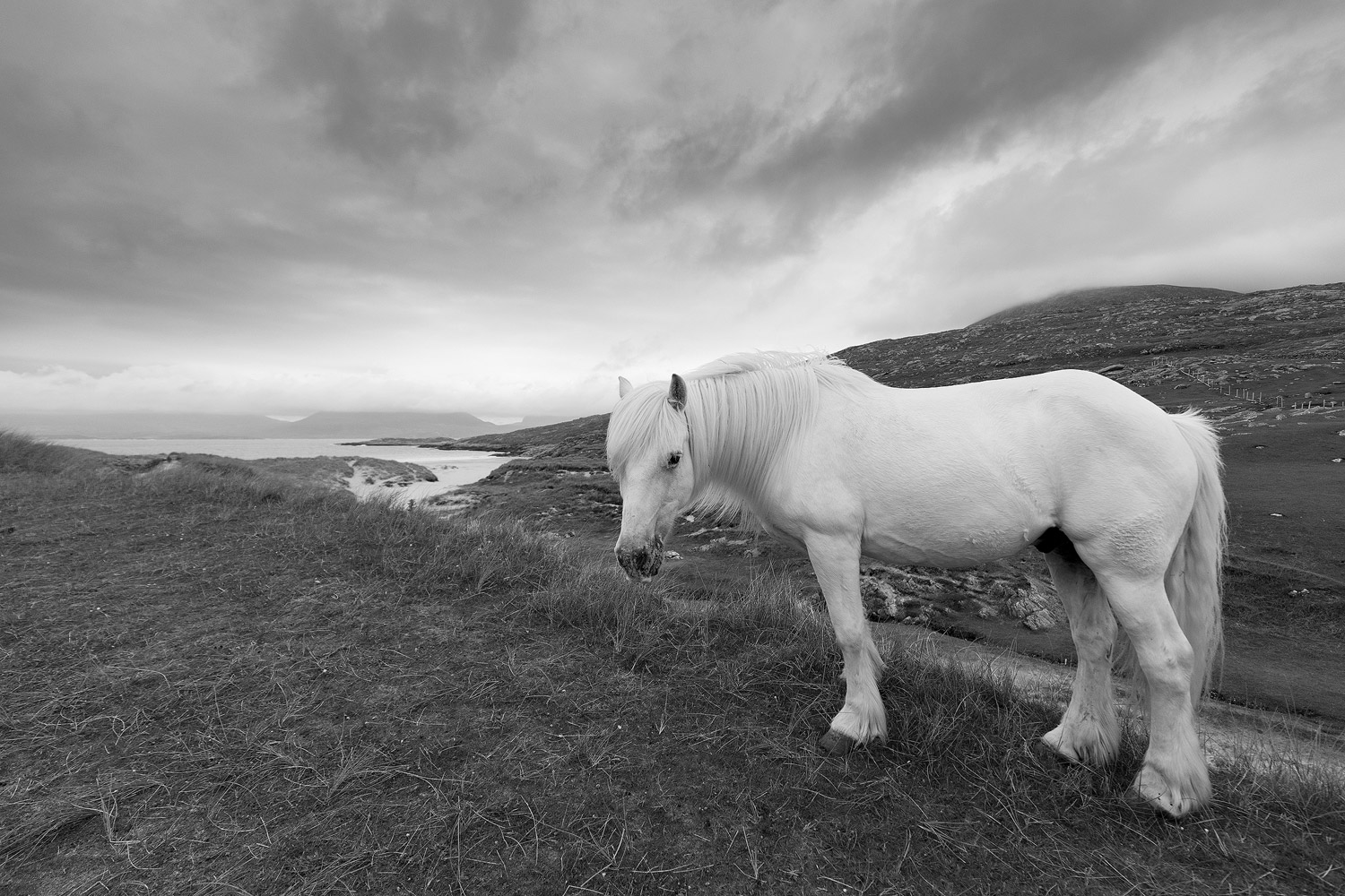 luskentyre-isle-of-harris-pony-1.jpg