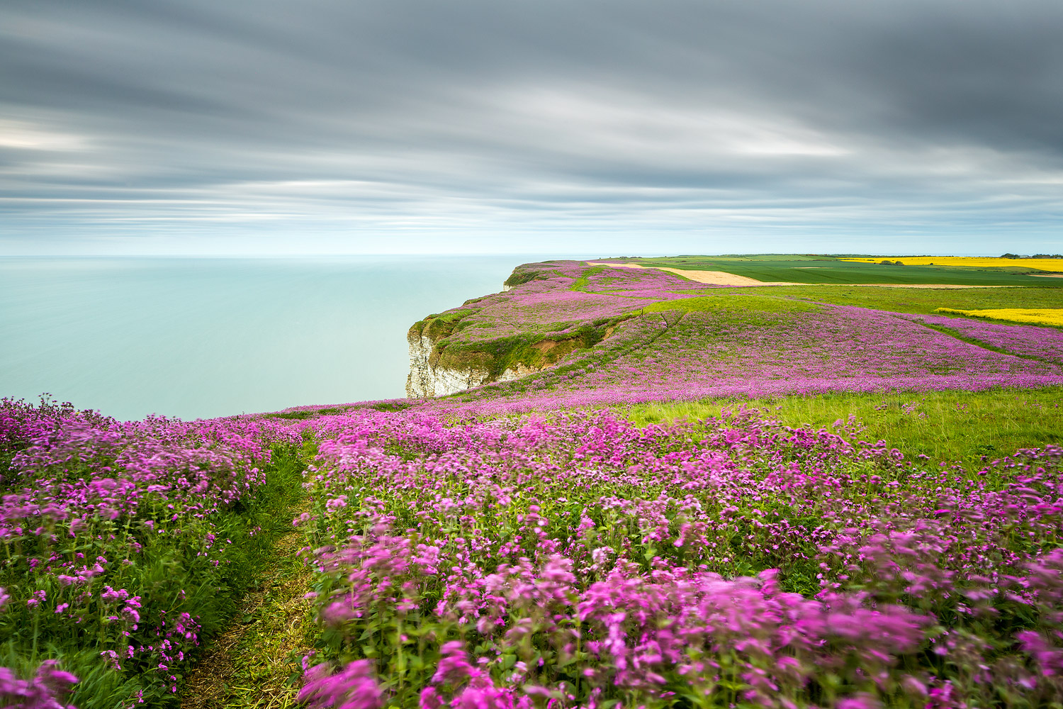 sea-of-pink-bempton-buckton-yorkshire-1.jpg