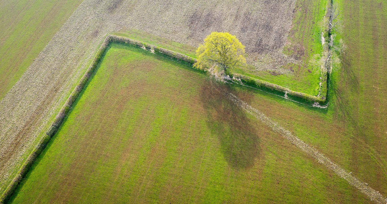 drone-image-4.jpg