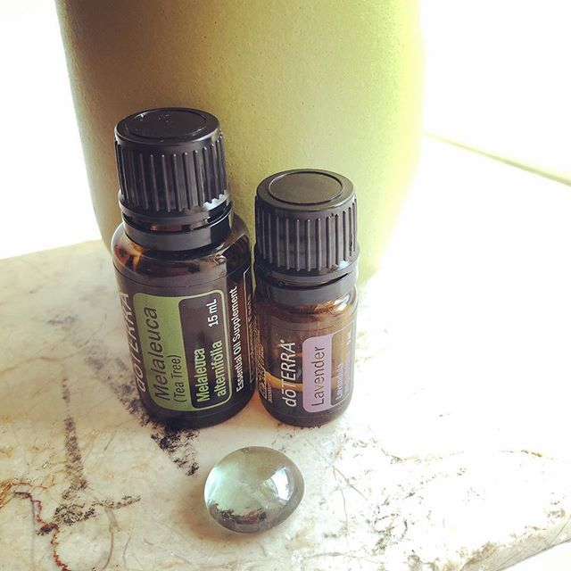 "Diffuse 3 drops of each to protect against seasonal threats. Cleans and disinfects the air and helps ""wash"" away the pollen and other bits we carry into our homes. Also Melelaluca (tea tree) is the Oil of energetic boundaries. So if you find yourself in the presence of emotional vampires, it's good protection for that too. #doterraeducation #seasonalallergyprotection #chemicalfreehome #lowtoxicliving #allergiesbegone  #midline"
