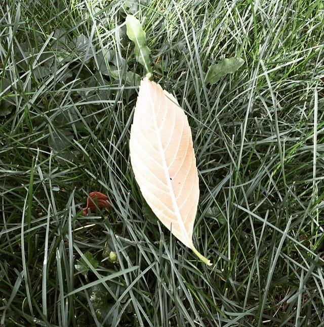 The center vein of a leaf is called the Ribline. Everything has a center. The natural world knows how to use it well. May we learn by watching and listening. #ribline #midline
