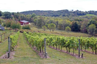 Wineries -