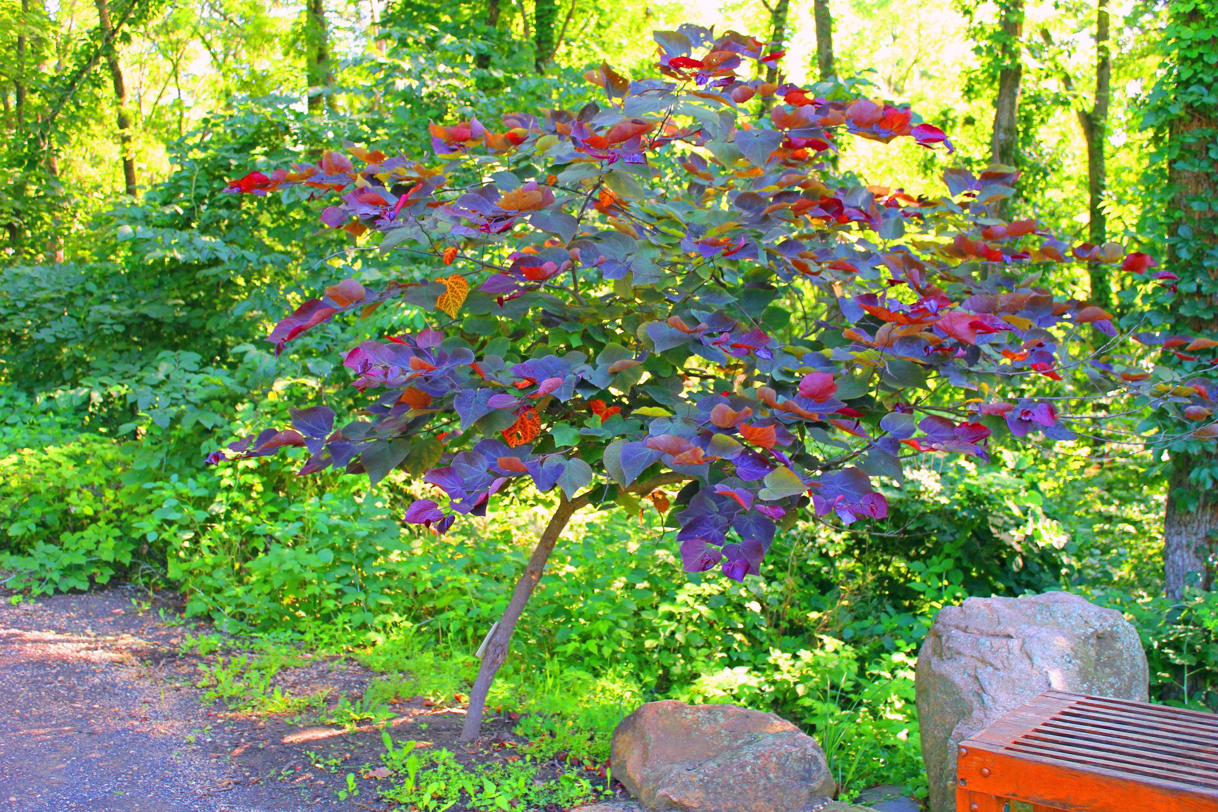 Arboretum-2-1.jpg