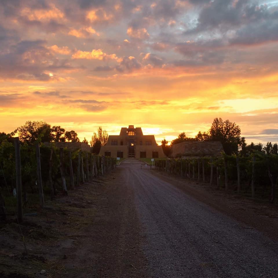 catena wine vineyard.jpg