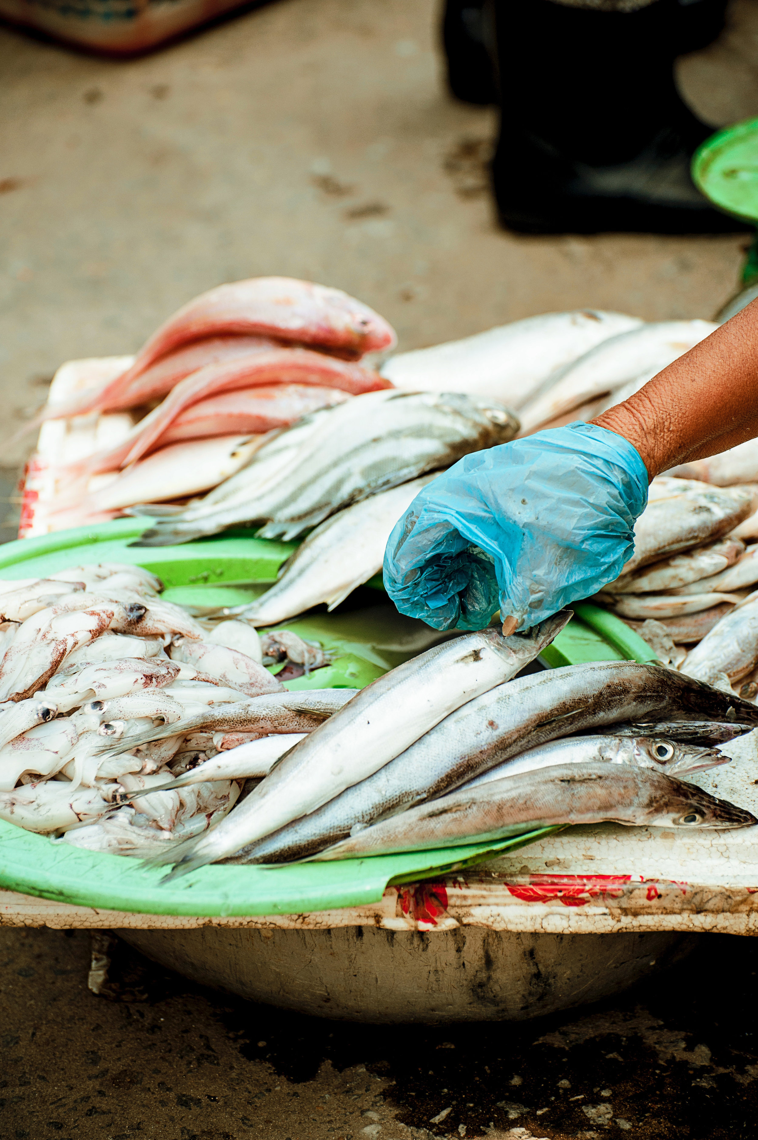You have plastic in you if you have eaten seafood or eat/drink from plastic containers. -