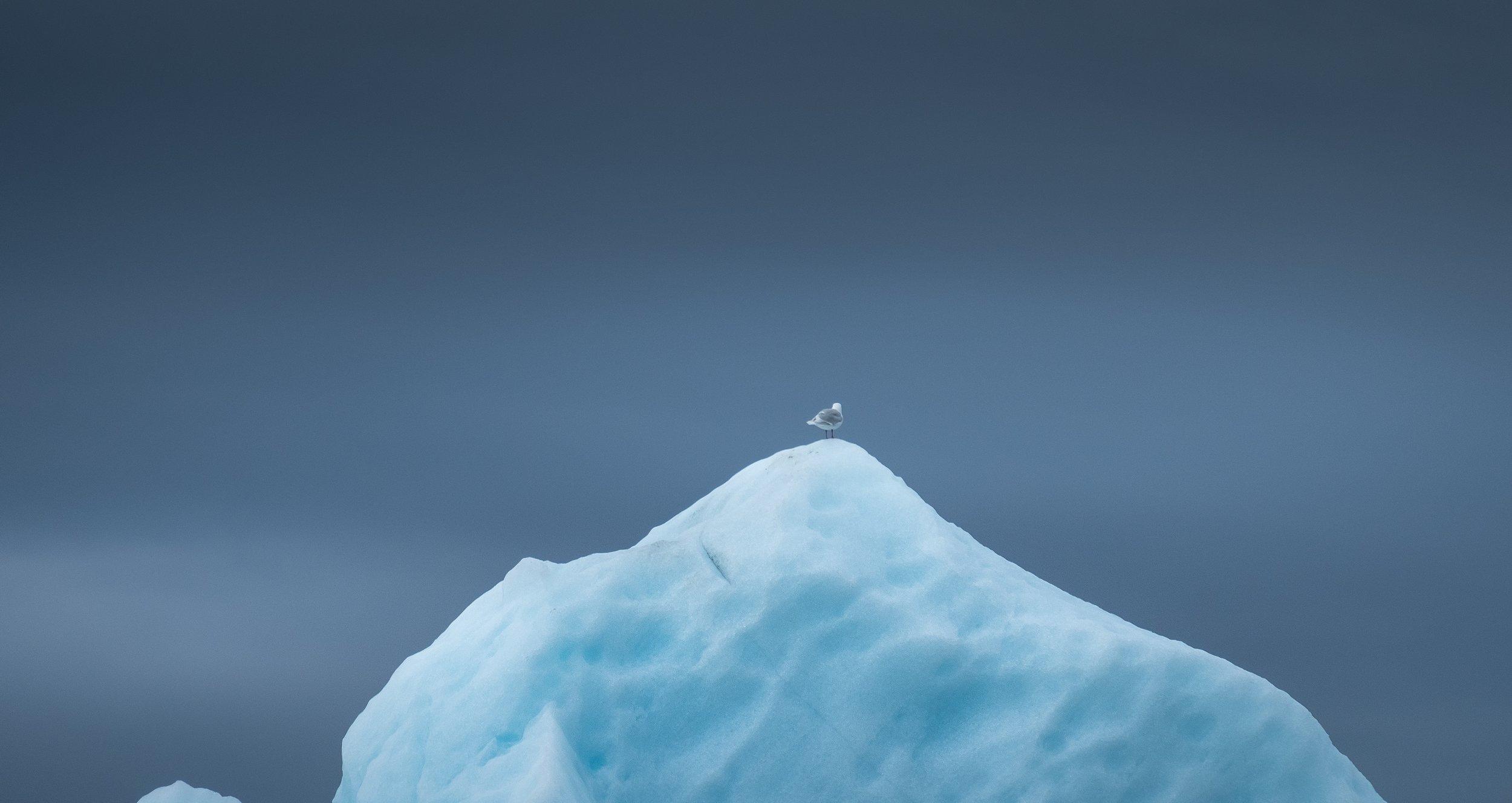 iceburg.jpg
