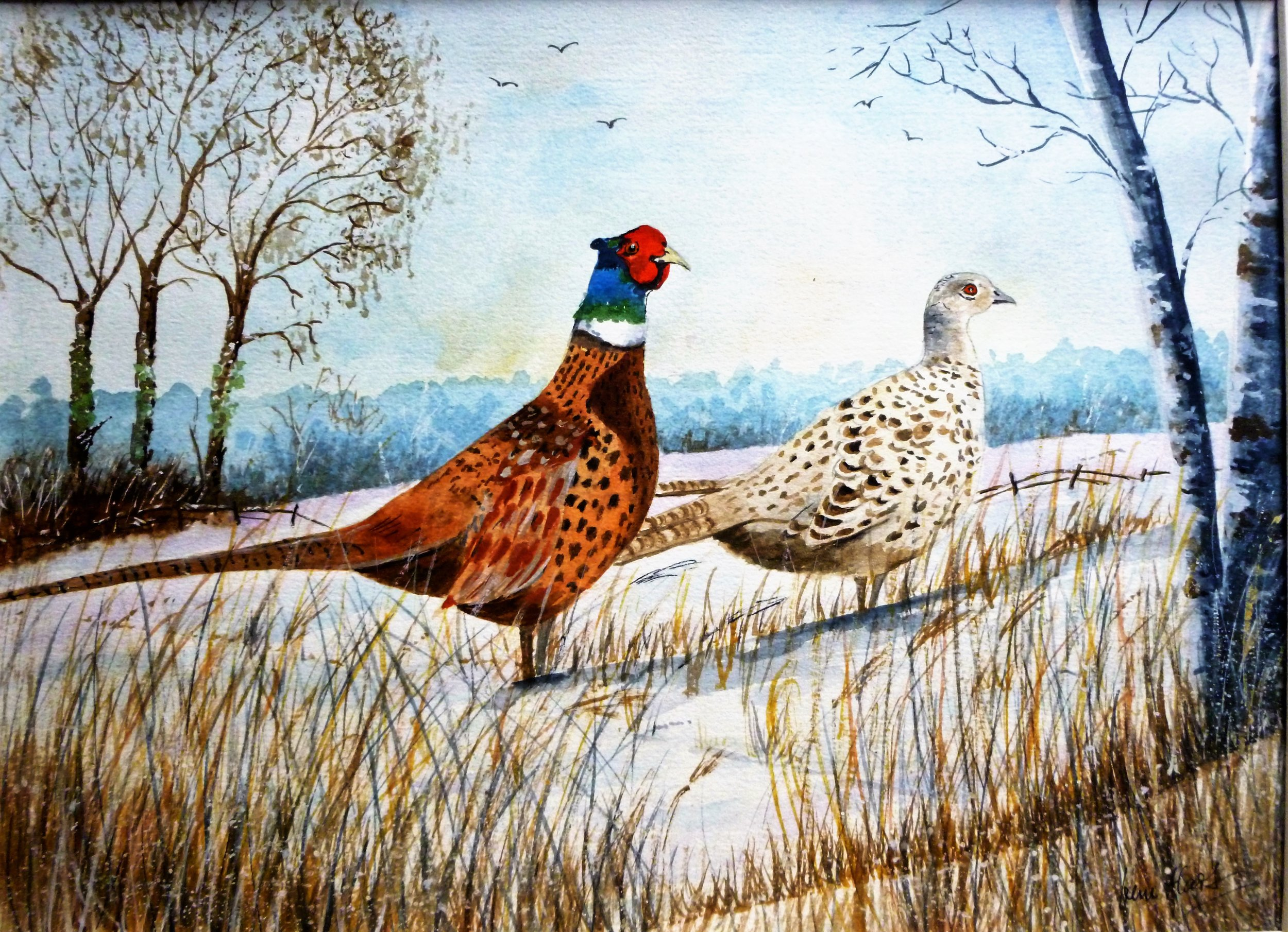 293 Pheasants in the Snow.JPG