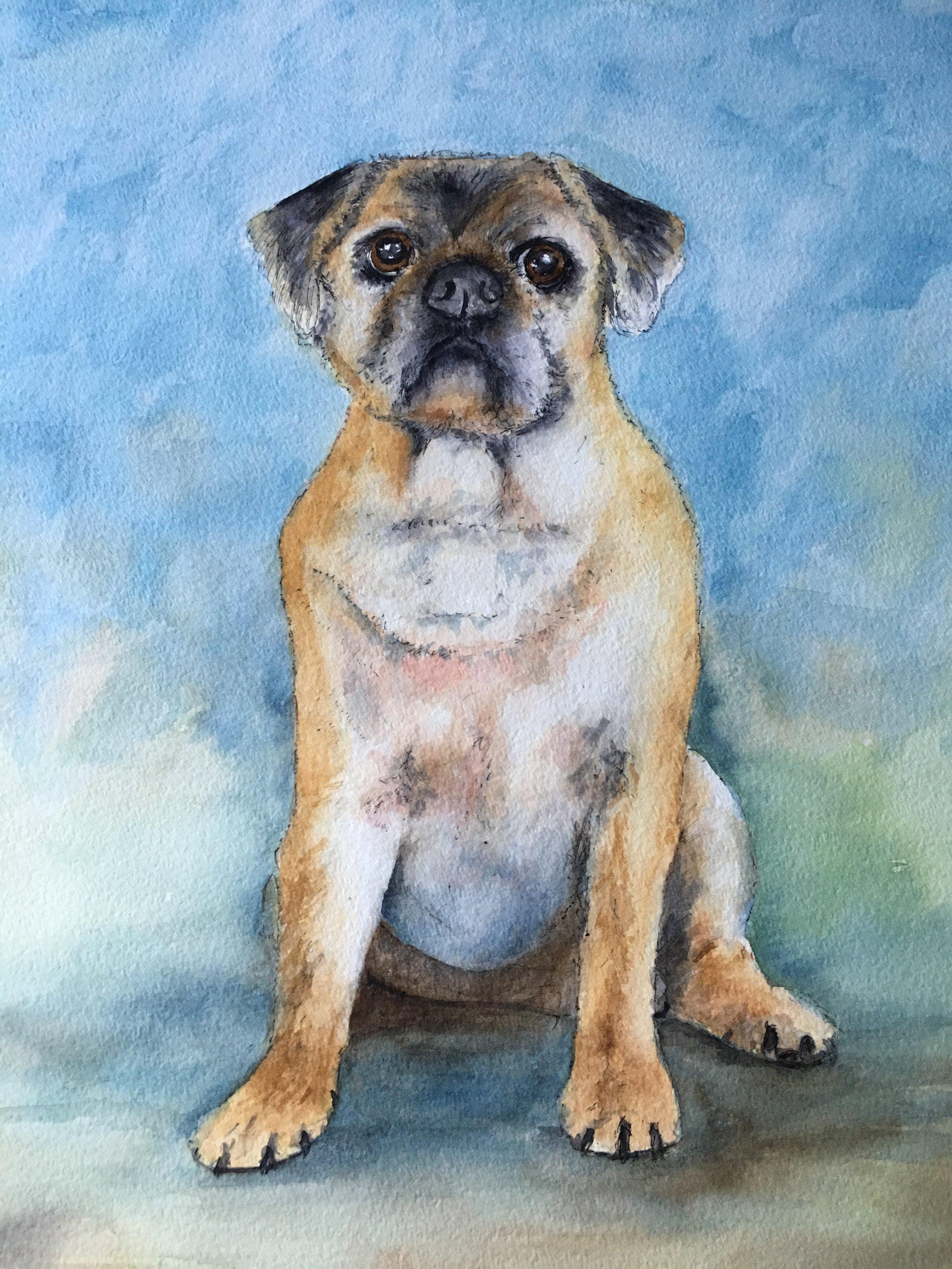 'Alfie' pet portrait. Watercoloue