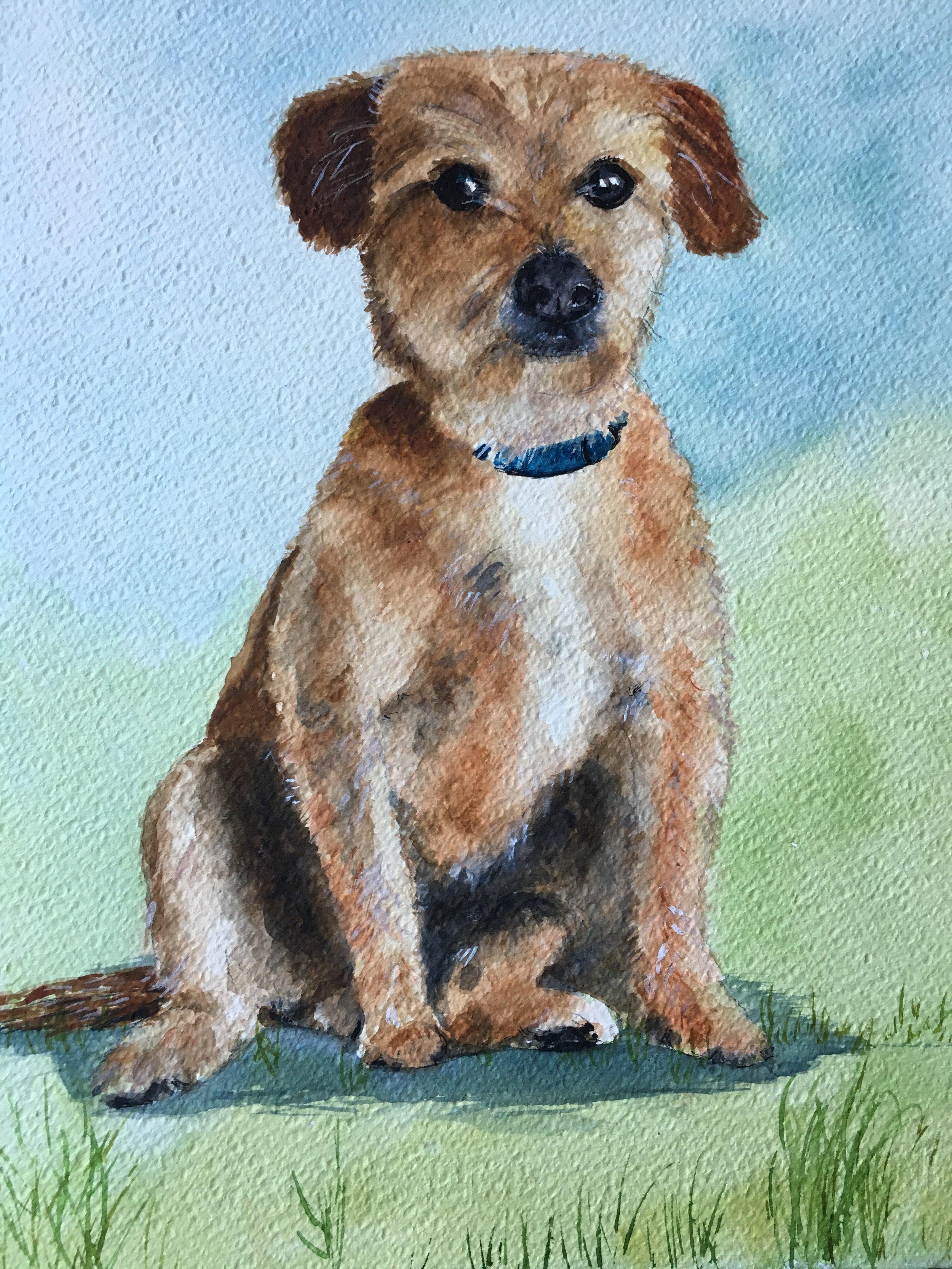 'Alfie' Pet portrait, commission. Watercolour