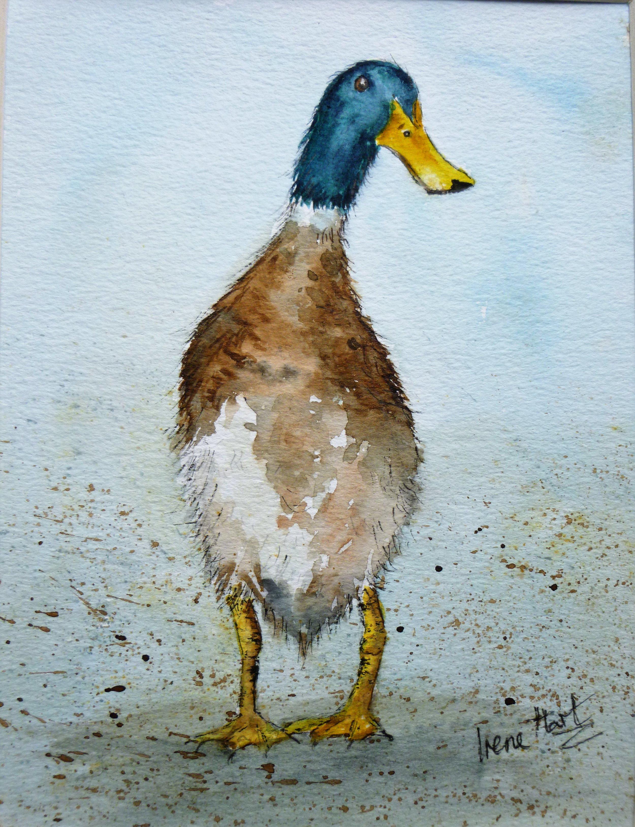 289Cor! Luv-a-Duck!.JPG