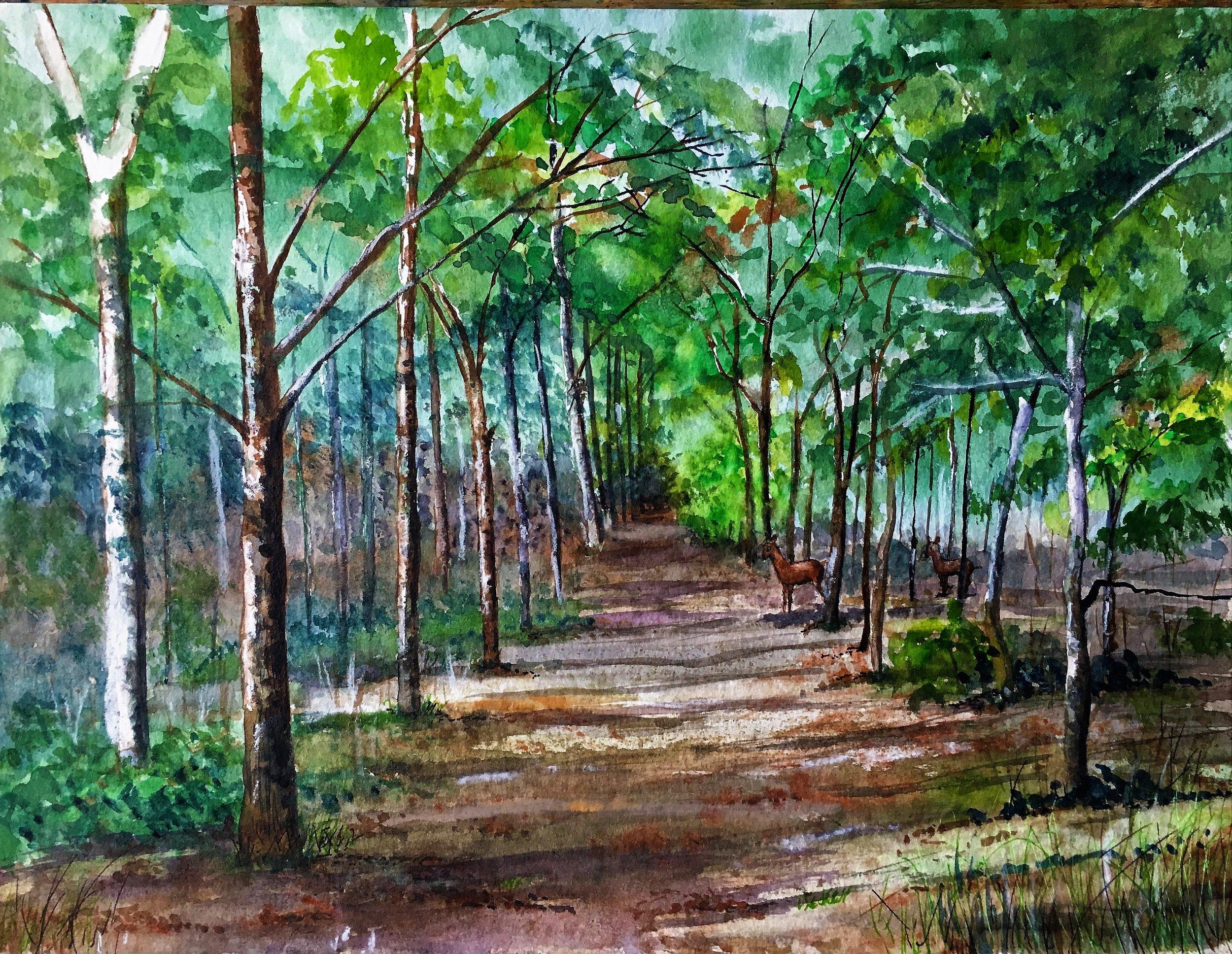 'Millenium Woods, Mendlesham, Summer