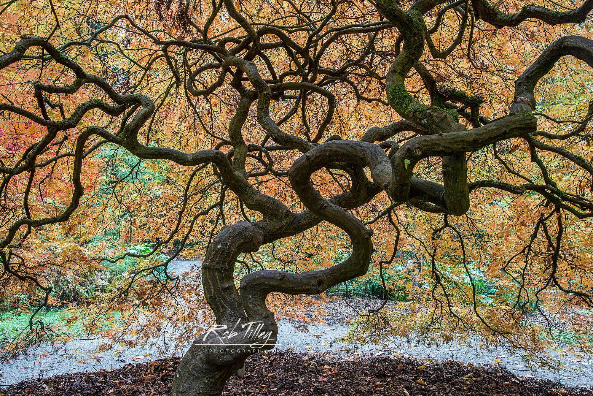 Dancing Tree_preview.jpeg