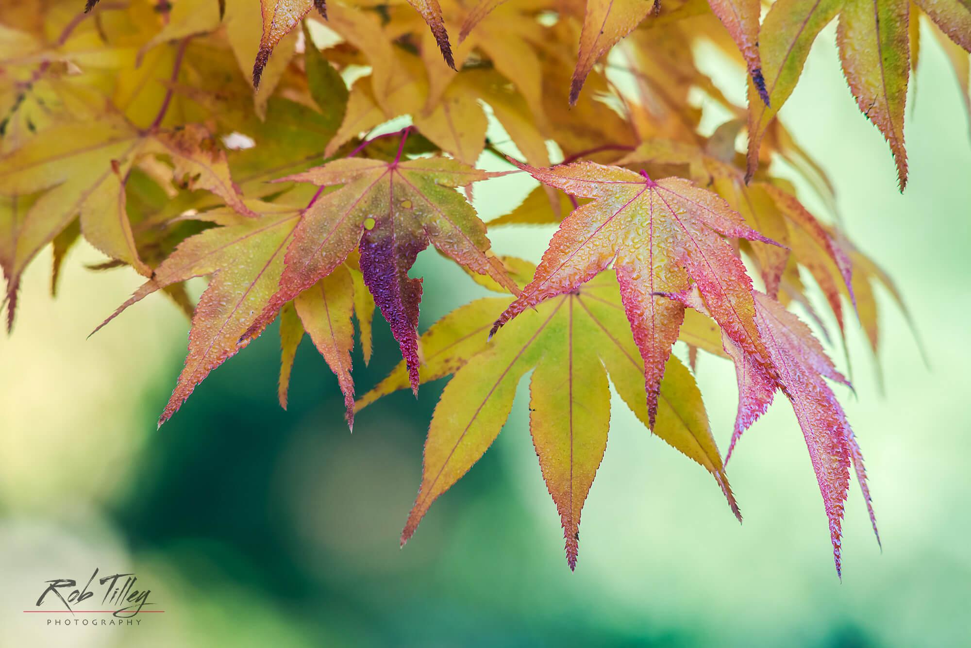 Autumn Leaves II.jpg