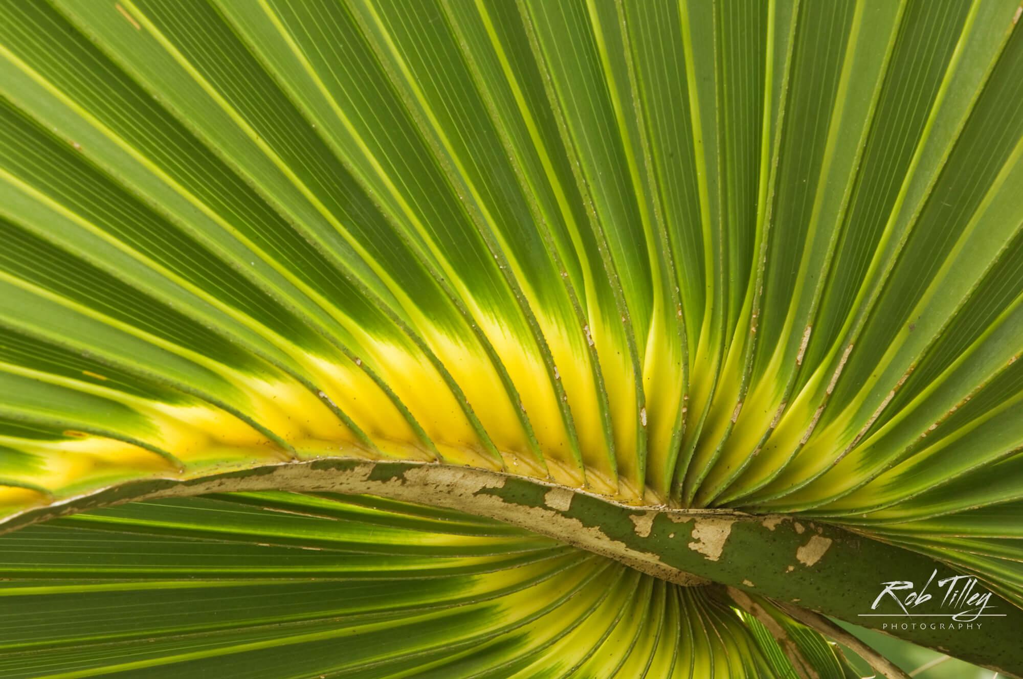 Cabbage Palmetto I.jpg