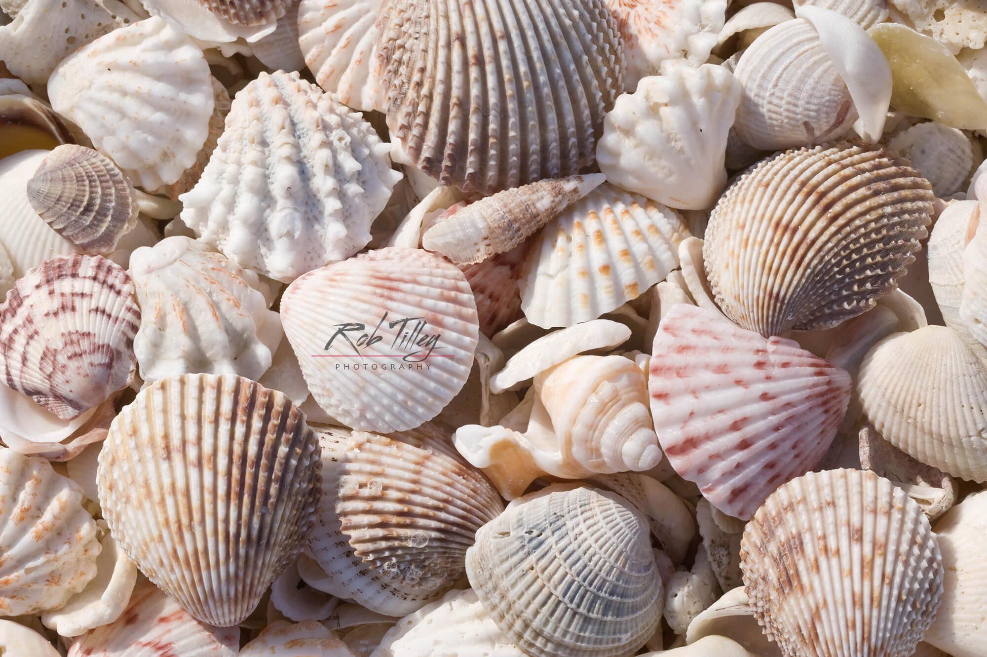 Seashells I.jpg