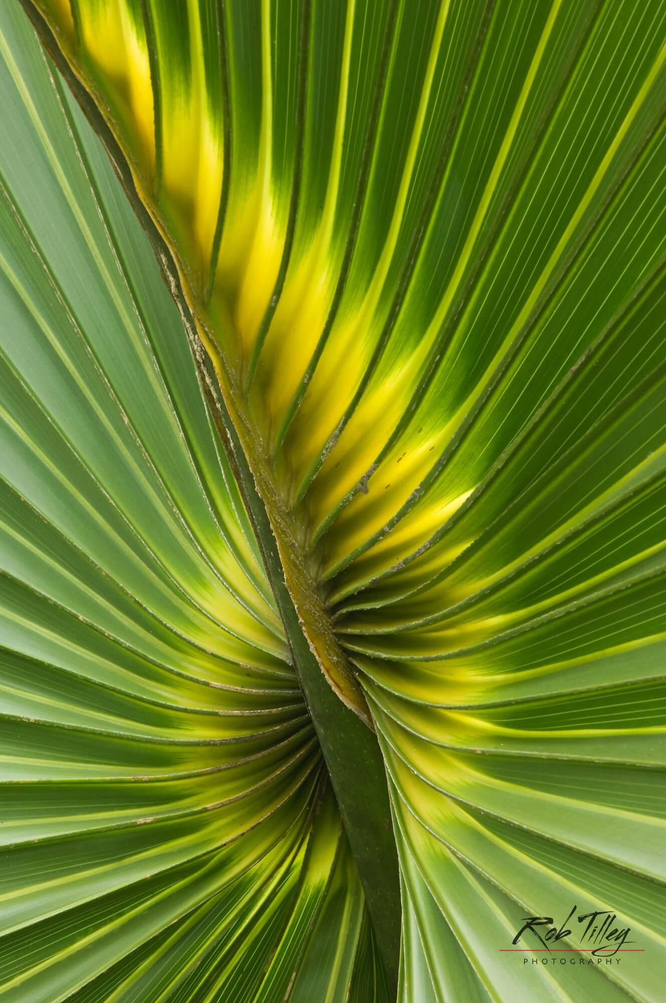 Cabbage Palmetto II.jpg