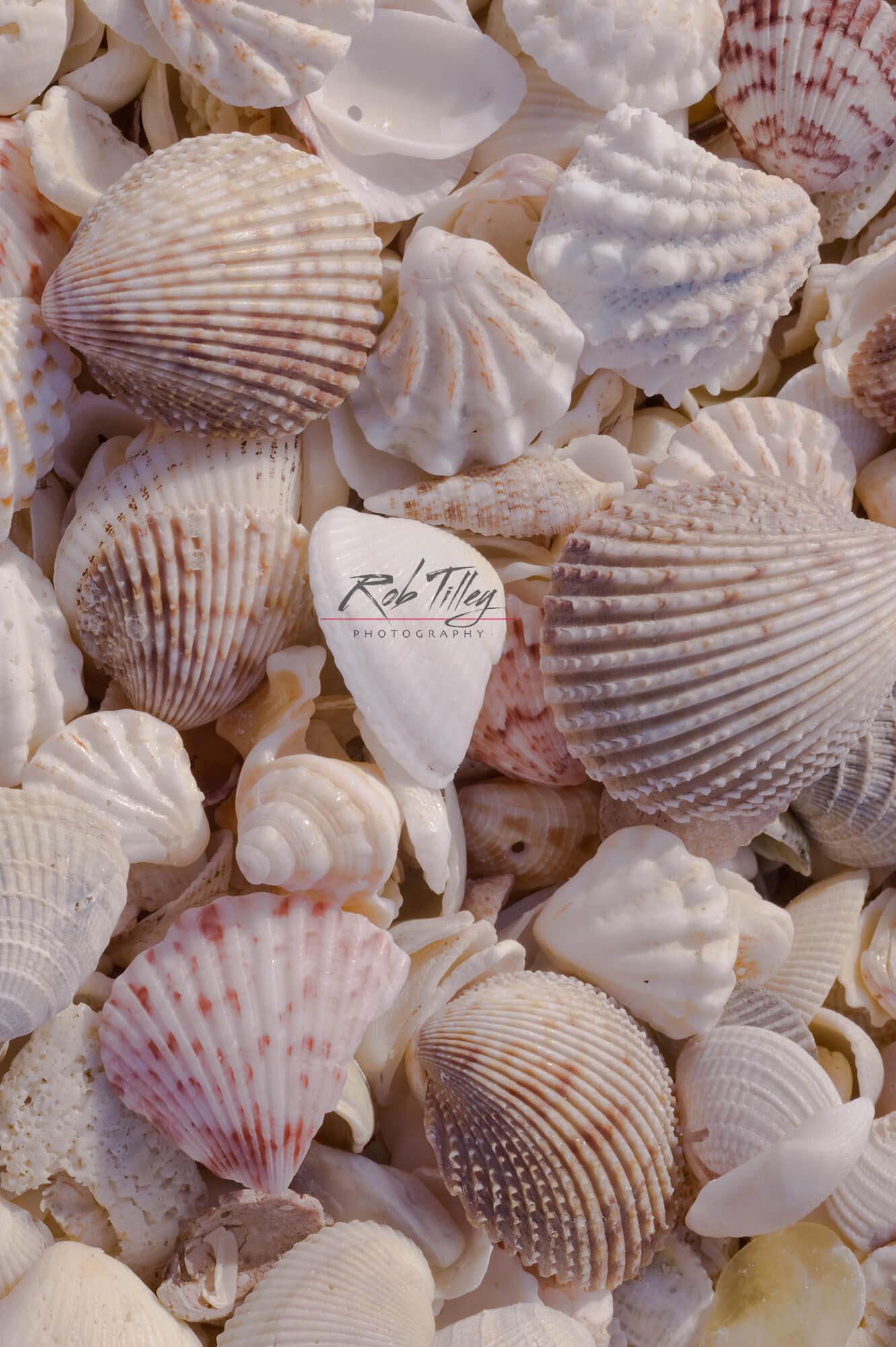 Seashells II.jpg