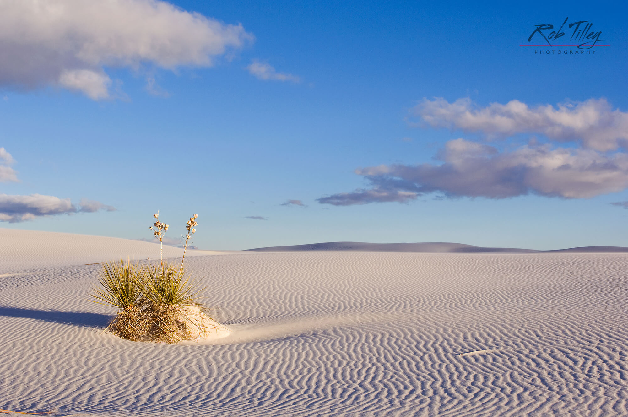 White Sands Yucca I