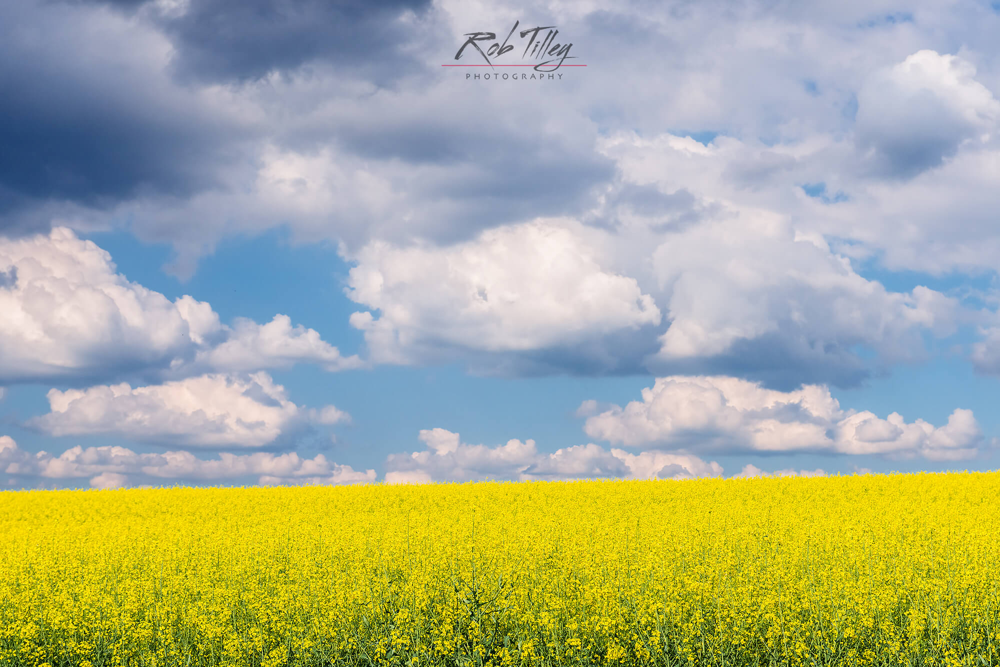 Canola & Clouds.jpg