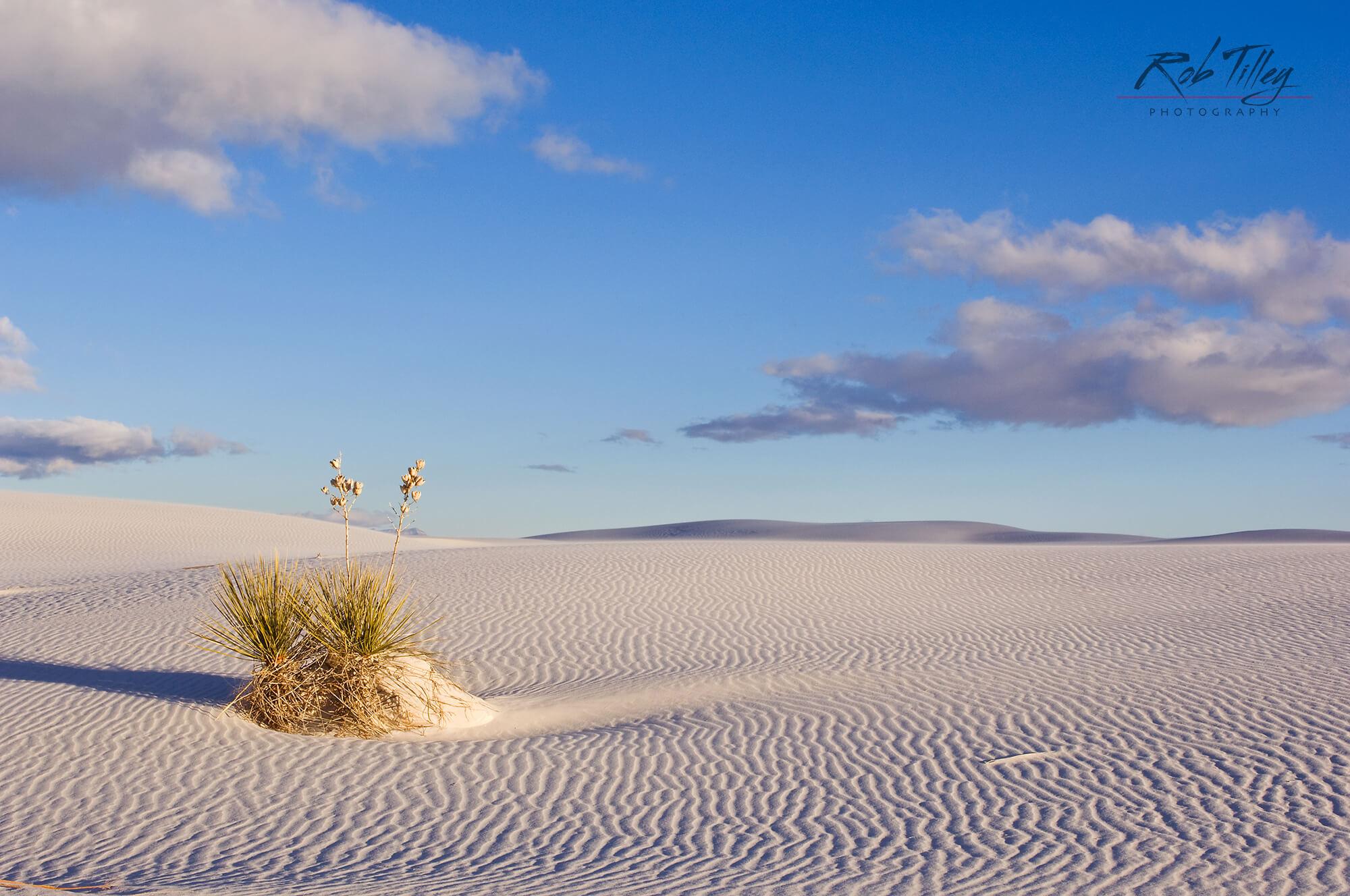 White Sands Yucca I.jpg