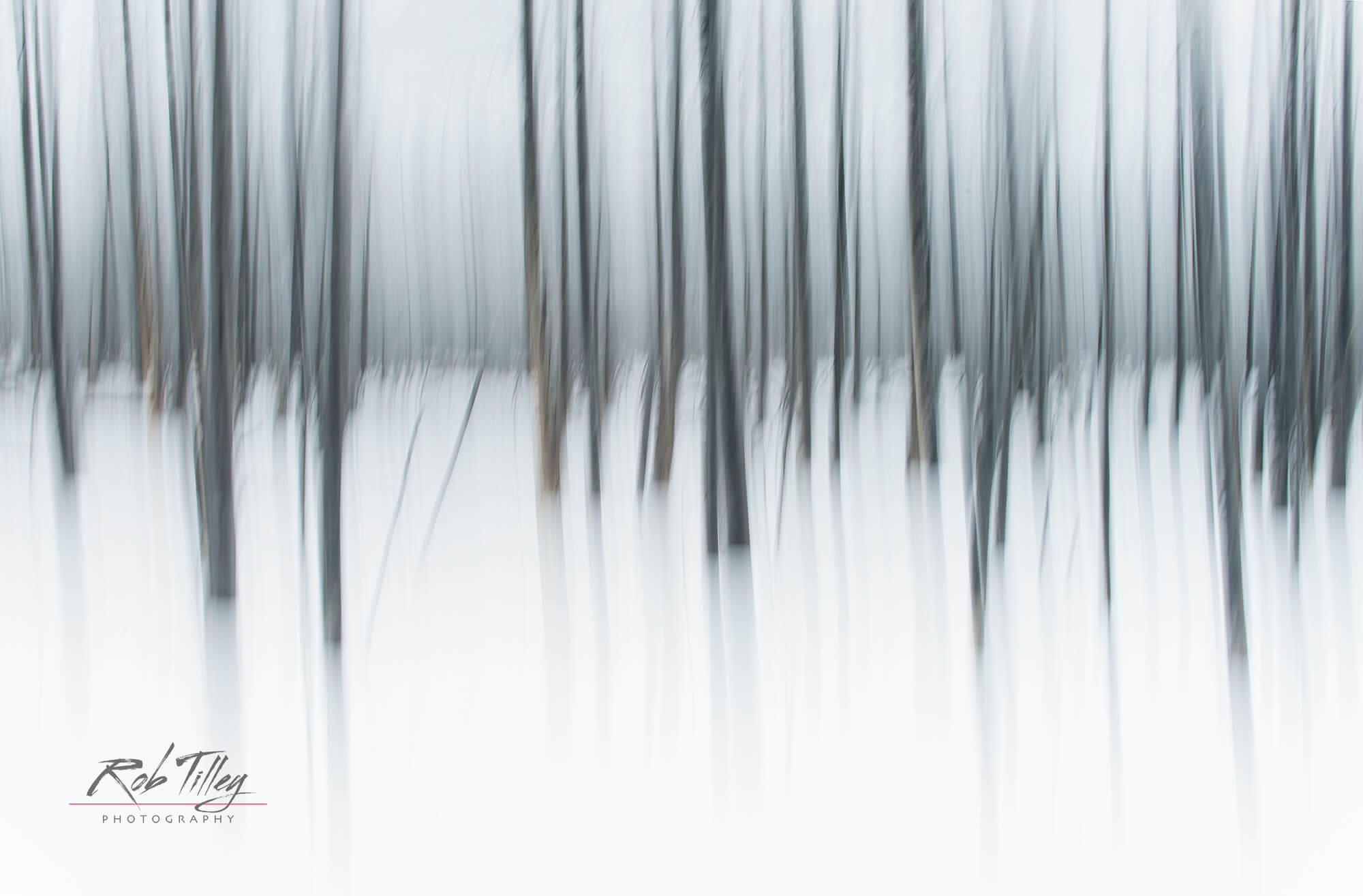 Winter Forest Abstract I