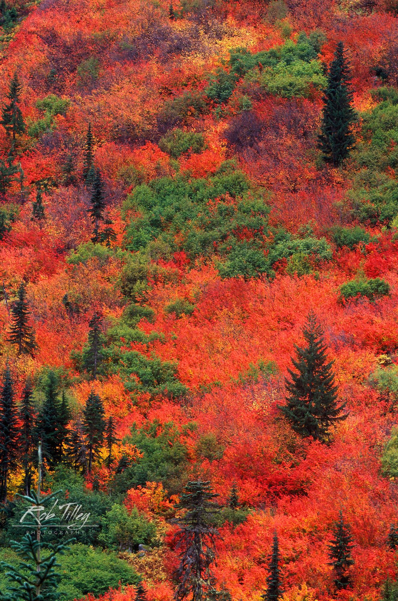 Steven's Pass Autumn
