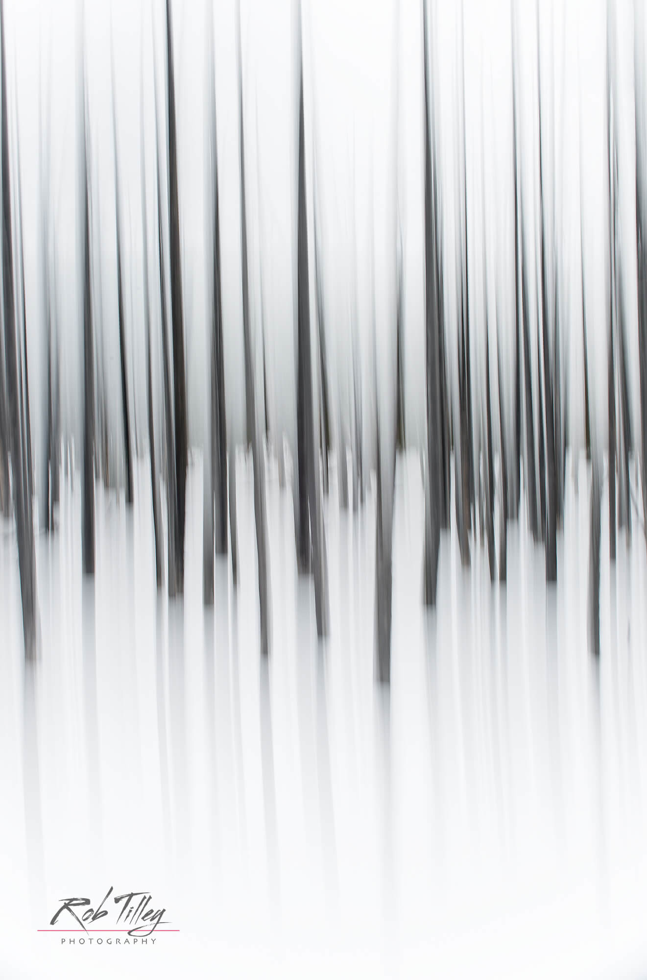 Winter Forest Abstract II.jpg