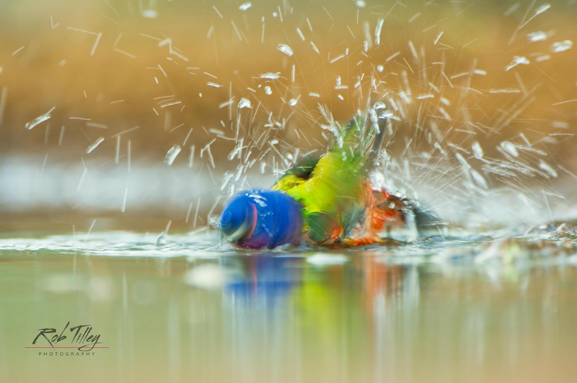 Water Dance.jpg