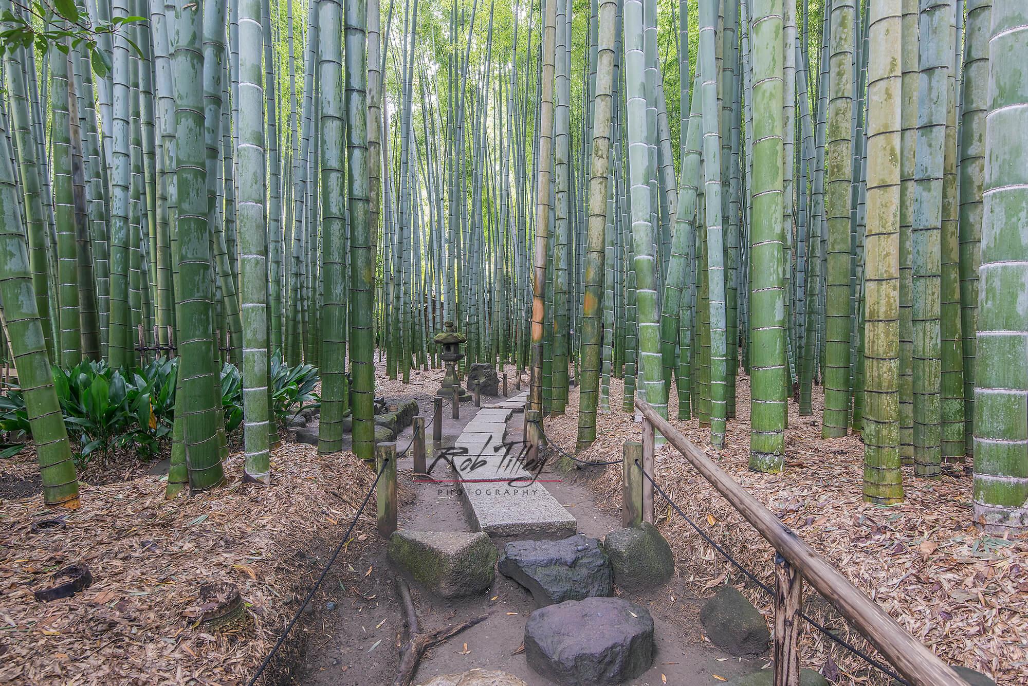 Bamboo Temple Garden I