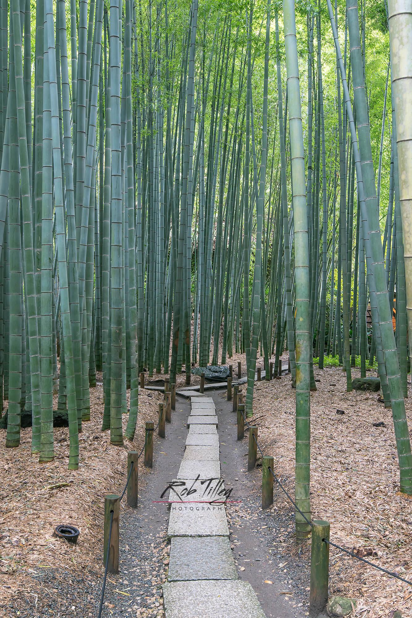 Bamboo Temple Garden II.jpg