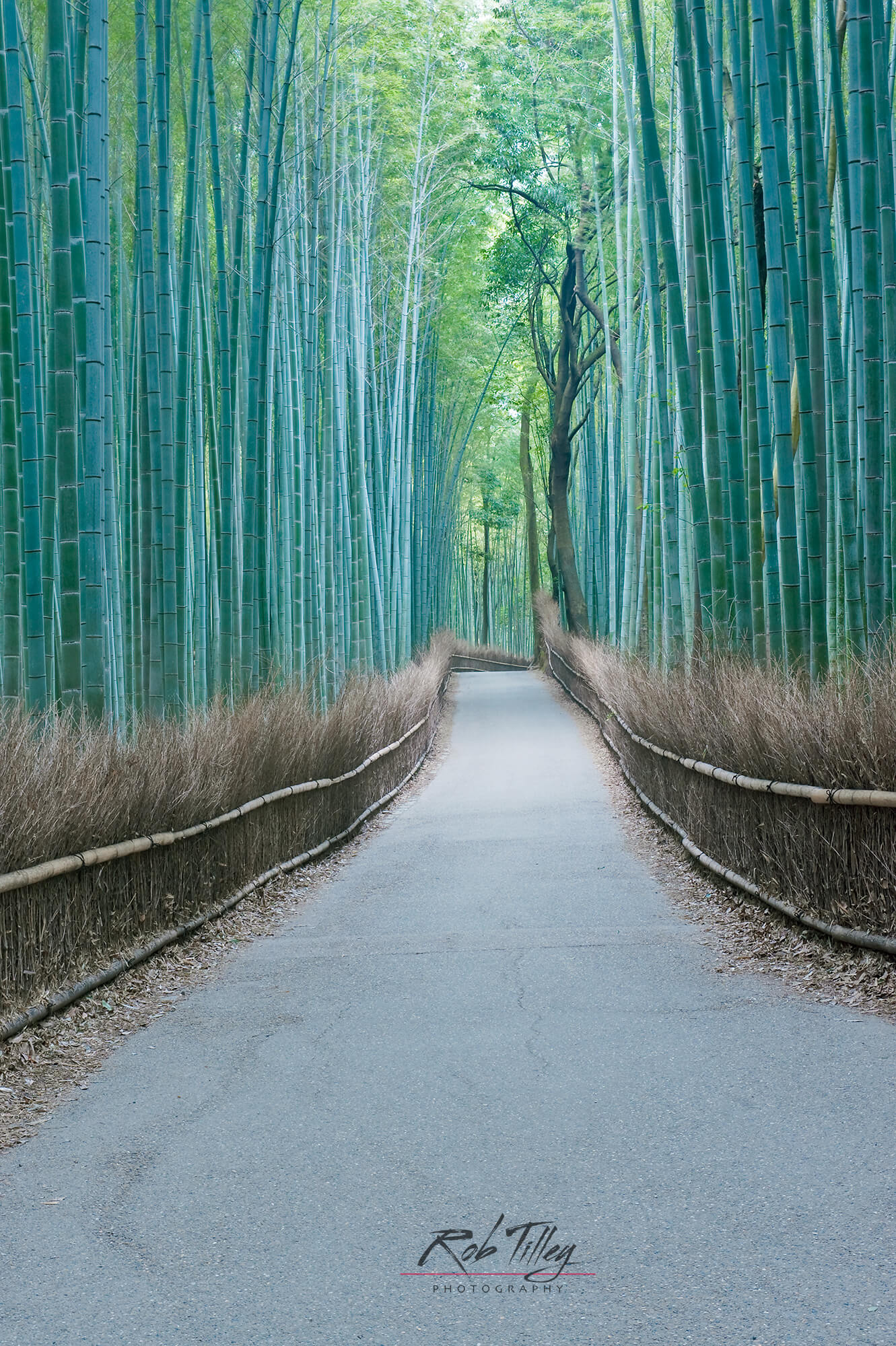 Sagano Bamboo Forest II