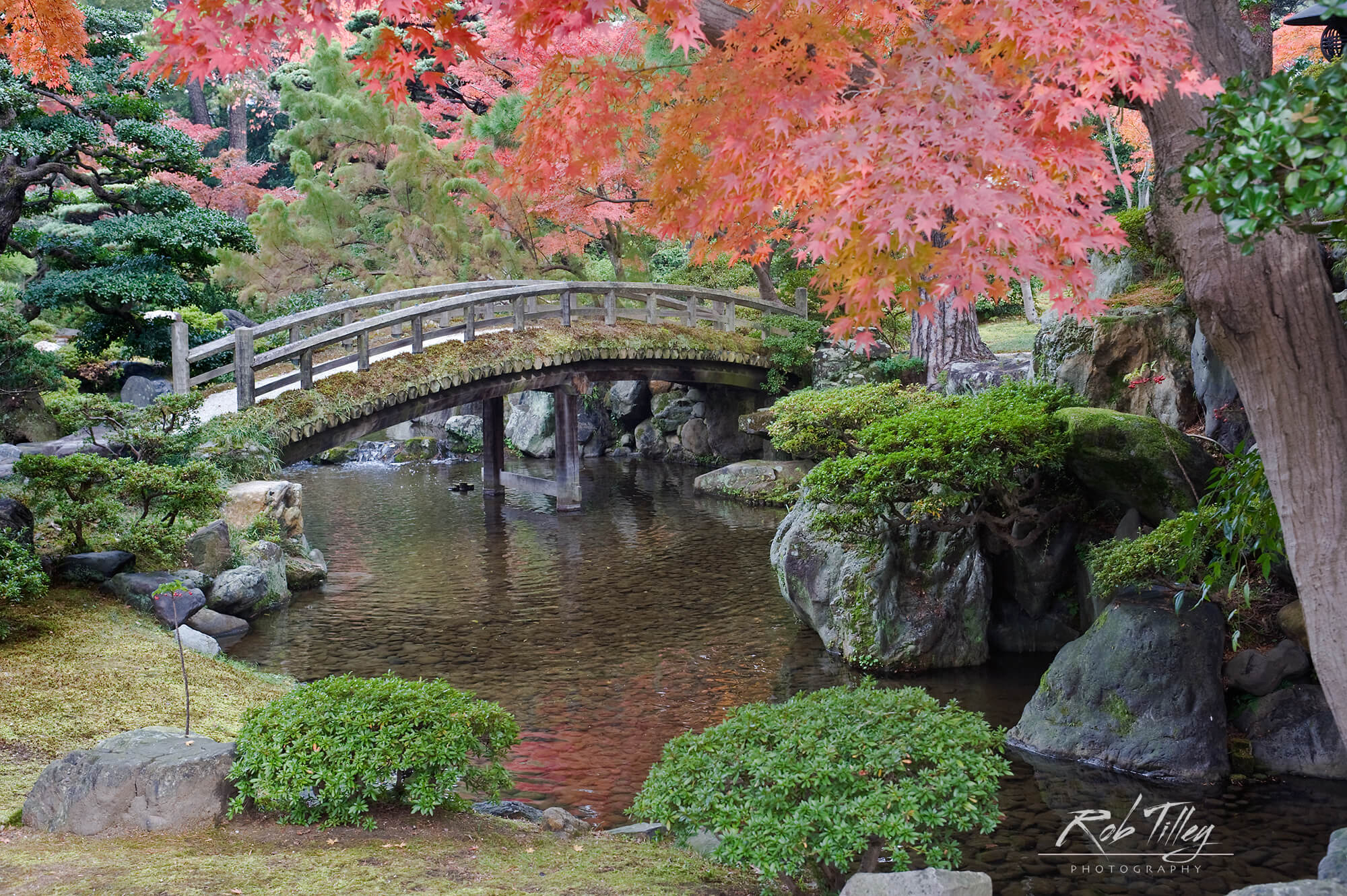 Kyoto Imperial Palace Garden I