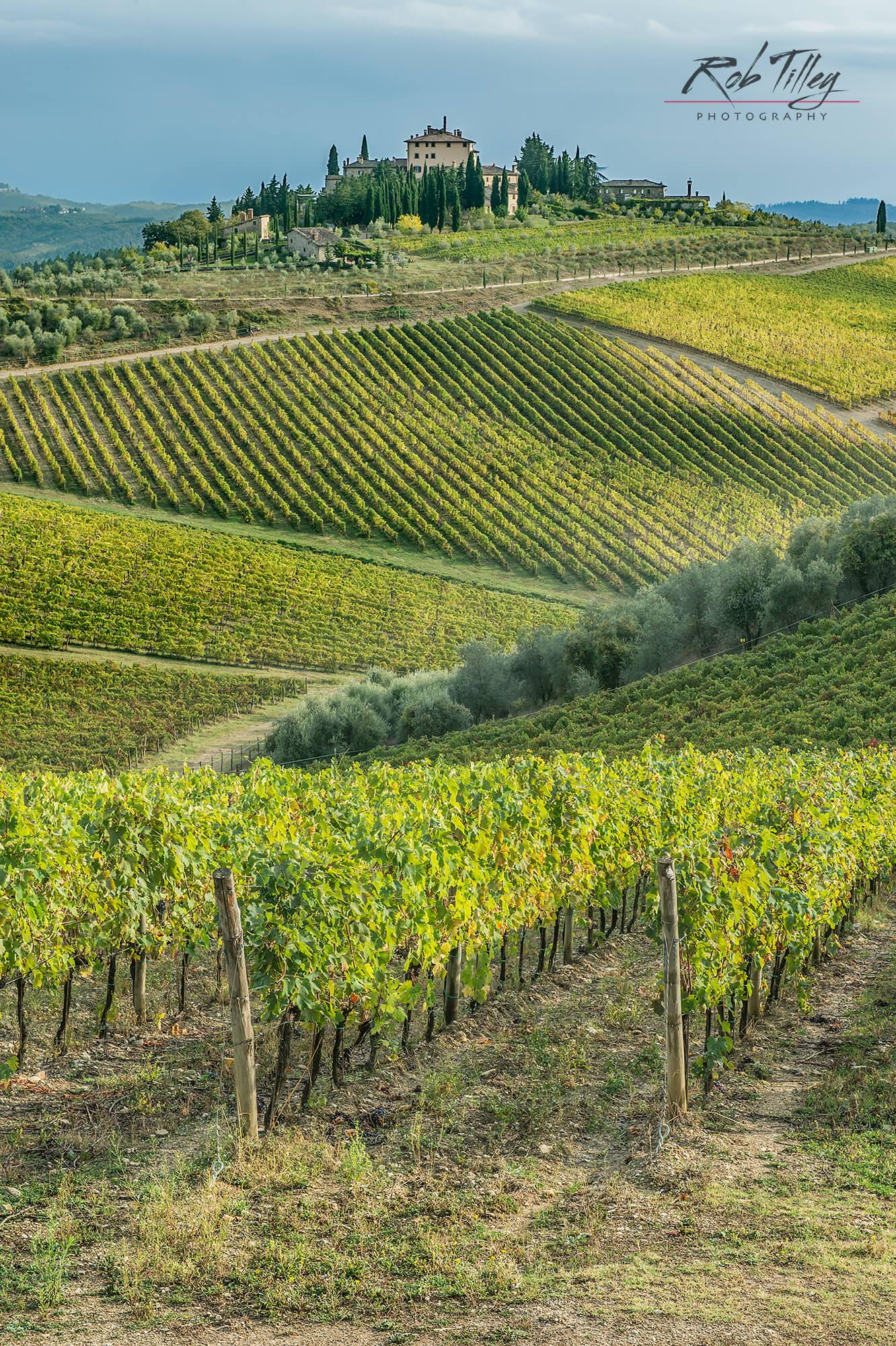 Chianti Vineyard II.jpg