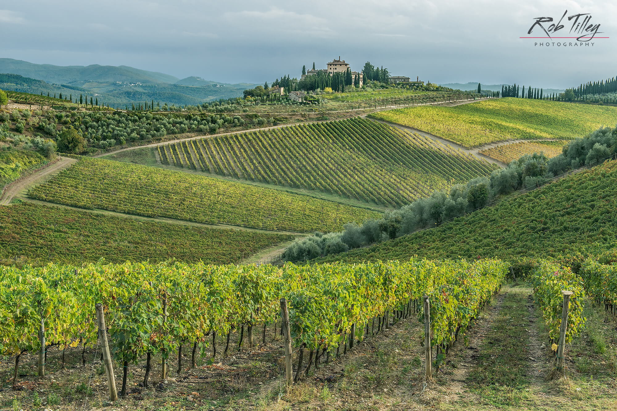 Chianti Vineyard I