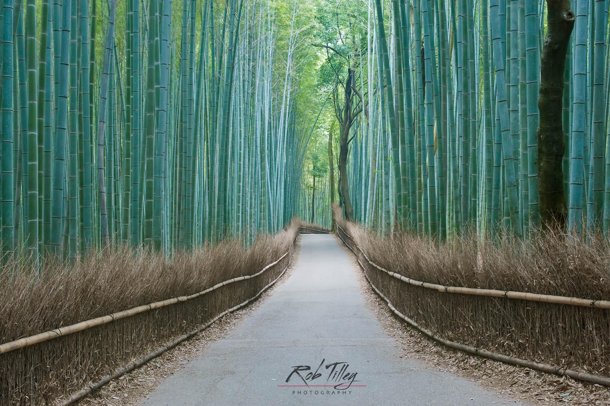 Sagano Bamboo Forest I