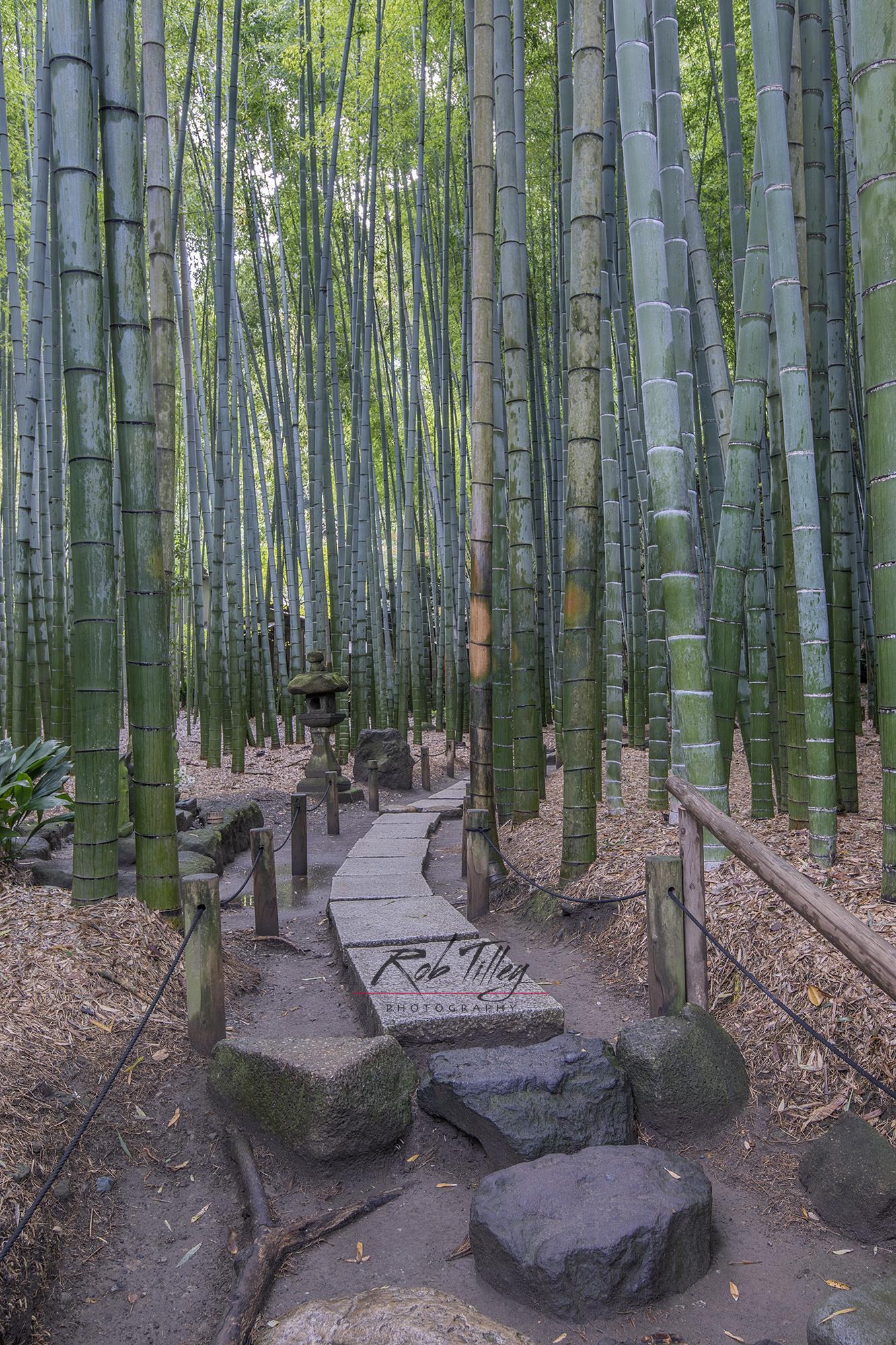 Bamboo Temple Garden III