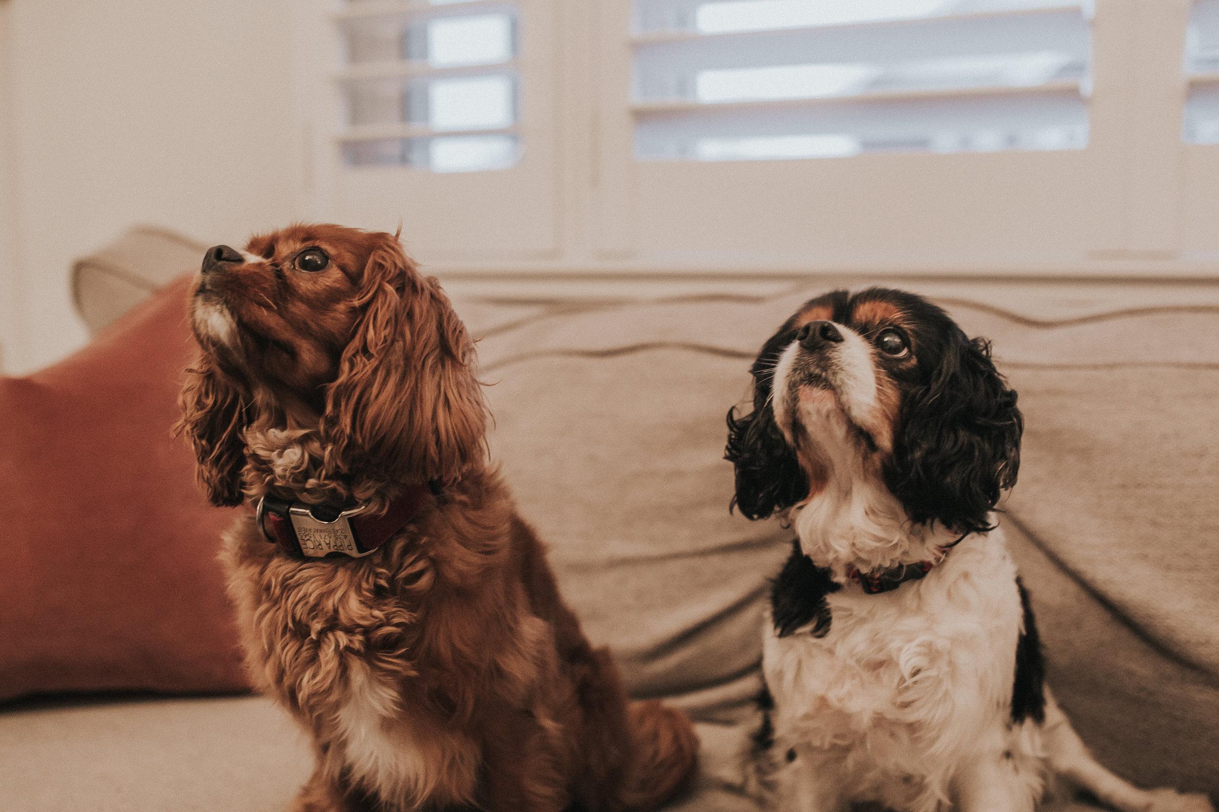 PIPPS & BELLA