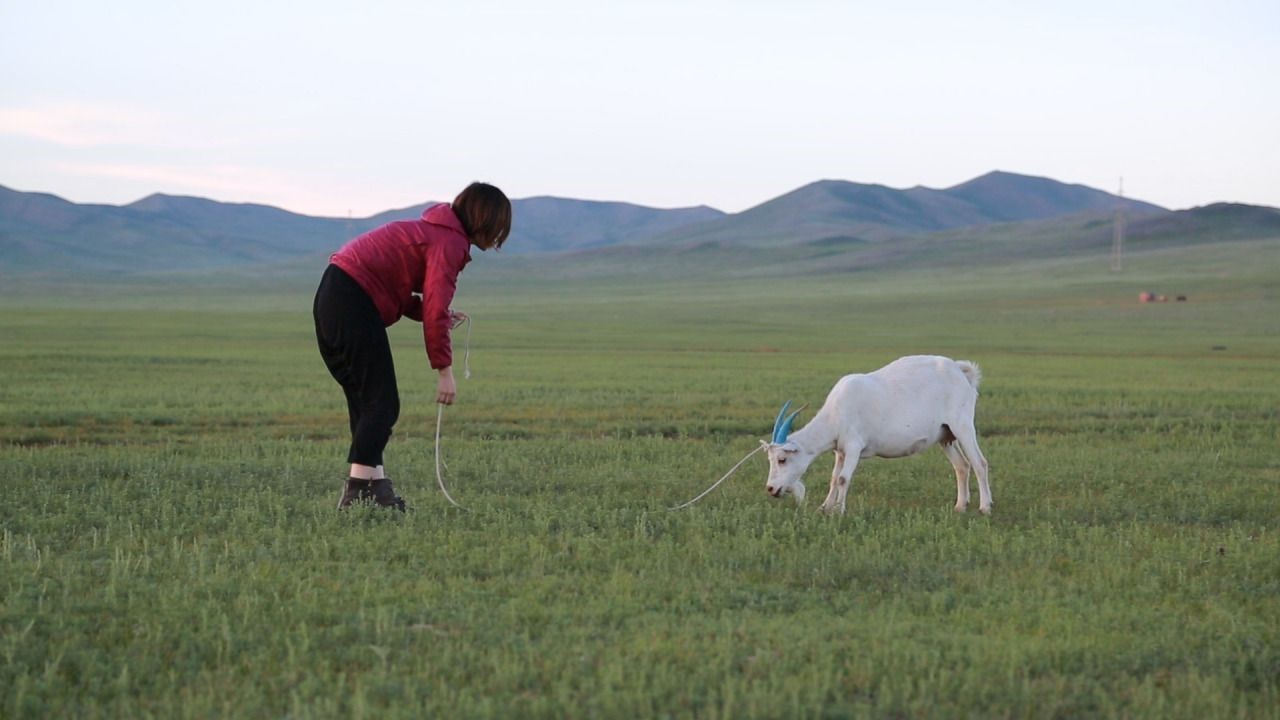 To Cuddle a Goat a Poor Grammar Exercise, Aya-Momose, 2016
