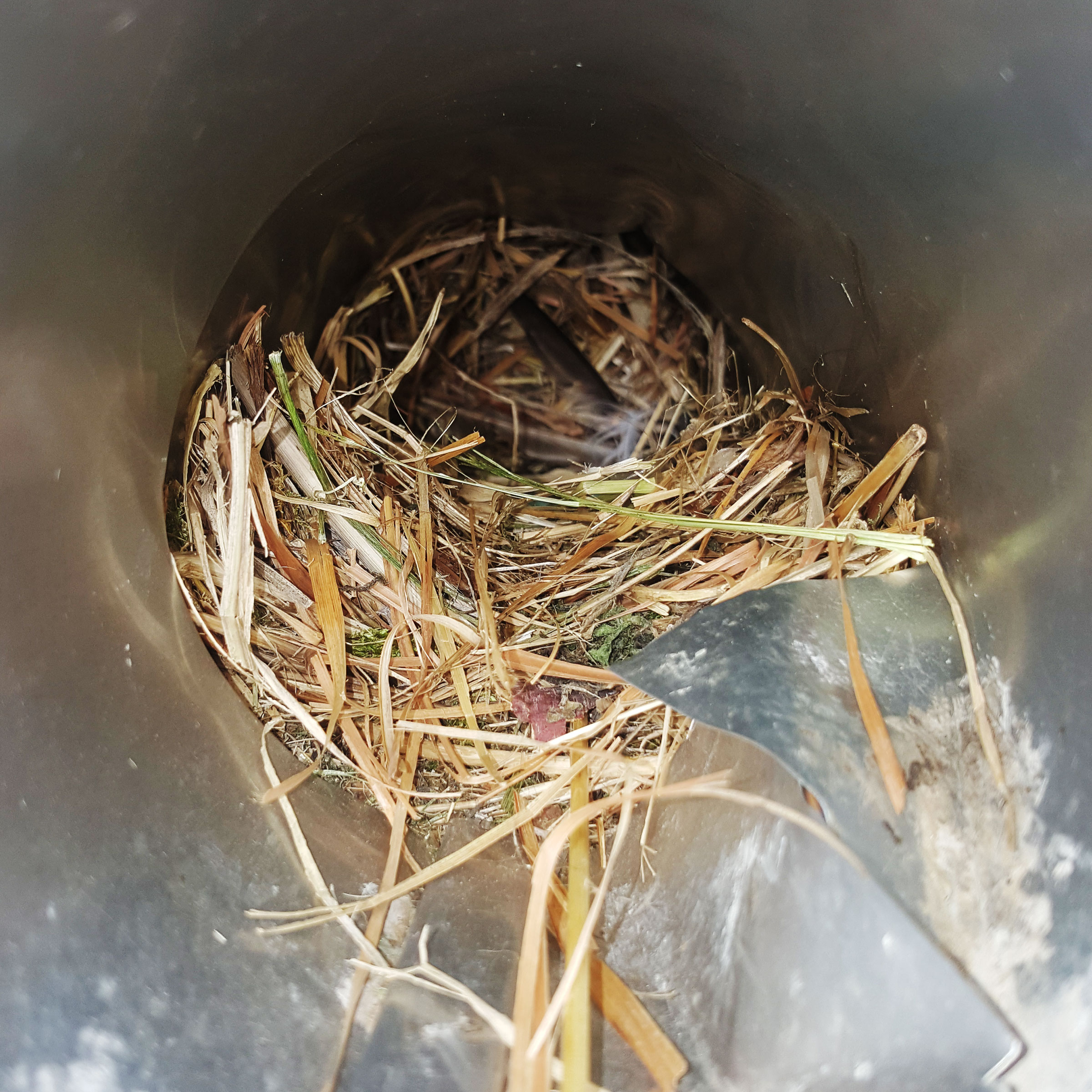 Dryer vent blocked due to a bird nest.