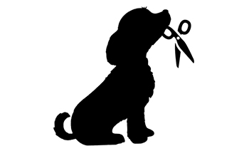 Pet Project.jpg