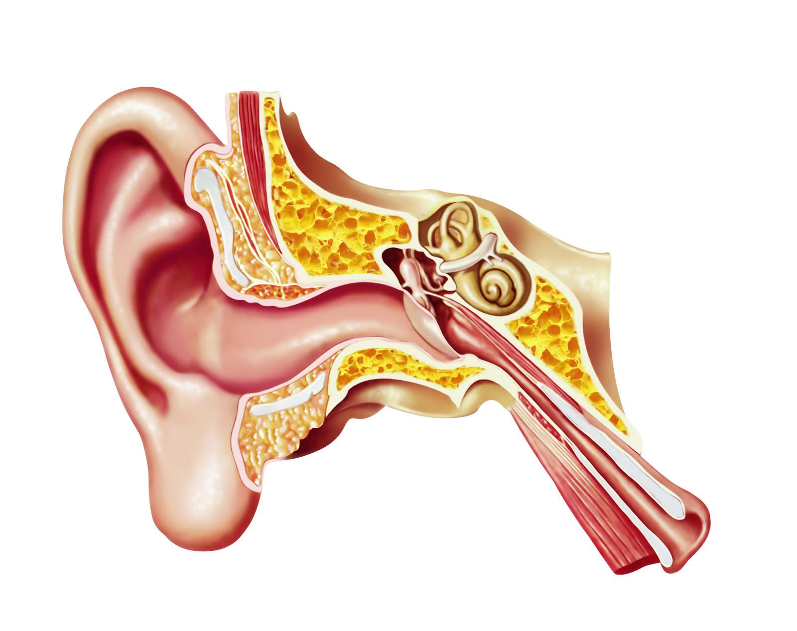 Ear Canal.jpg