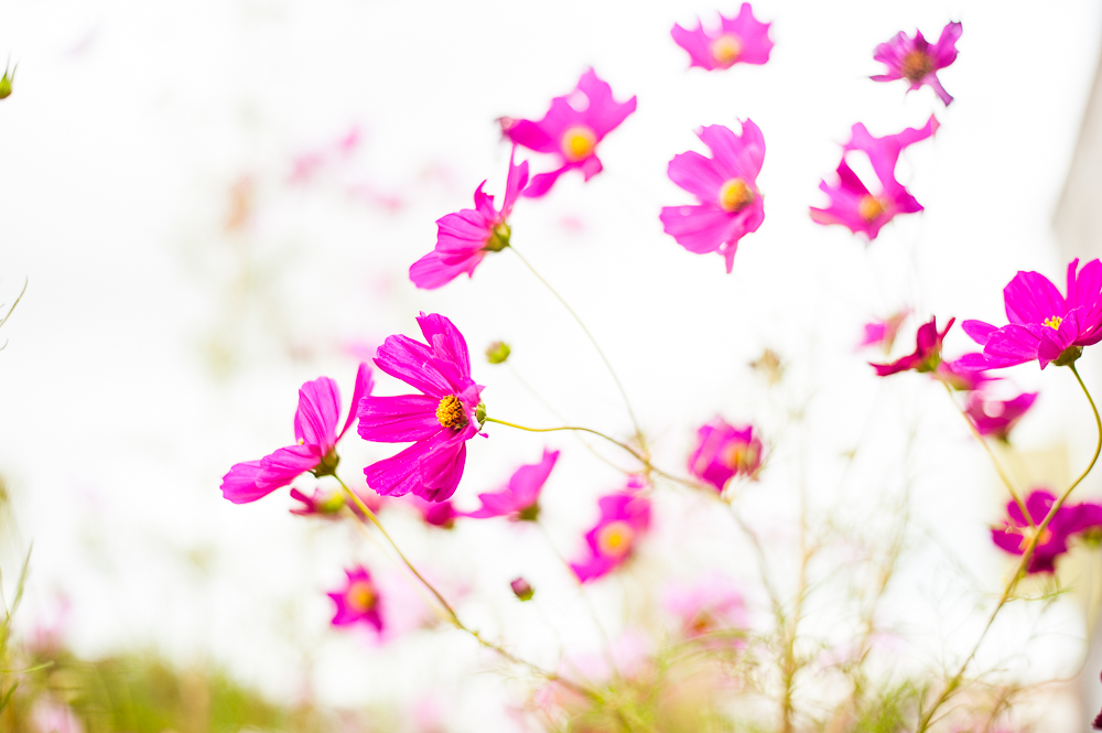 bandlcreative_flowers-marfa-1.jpg